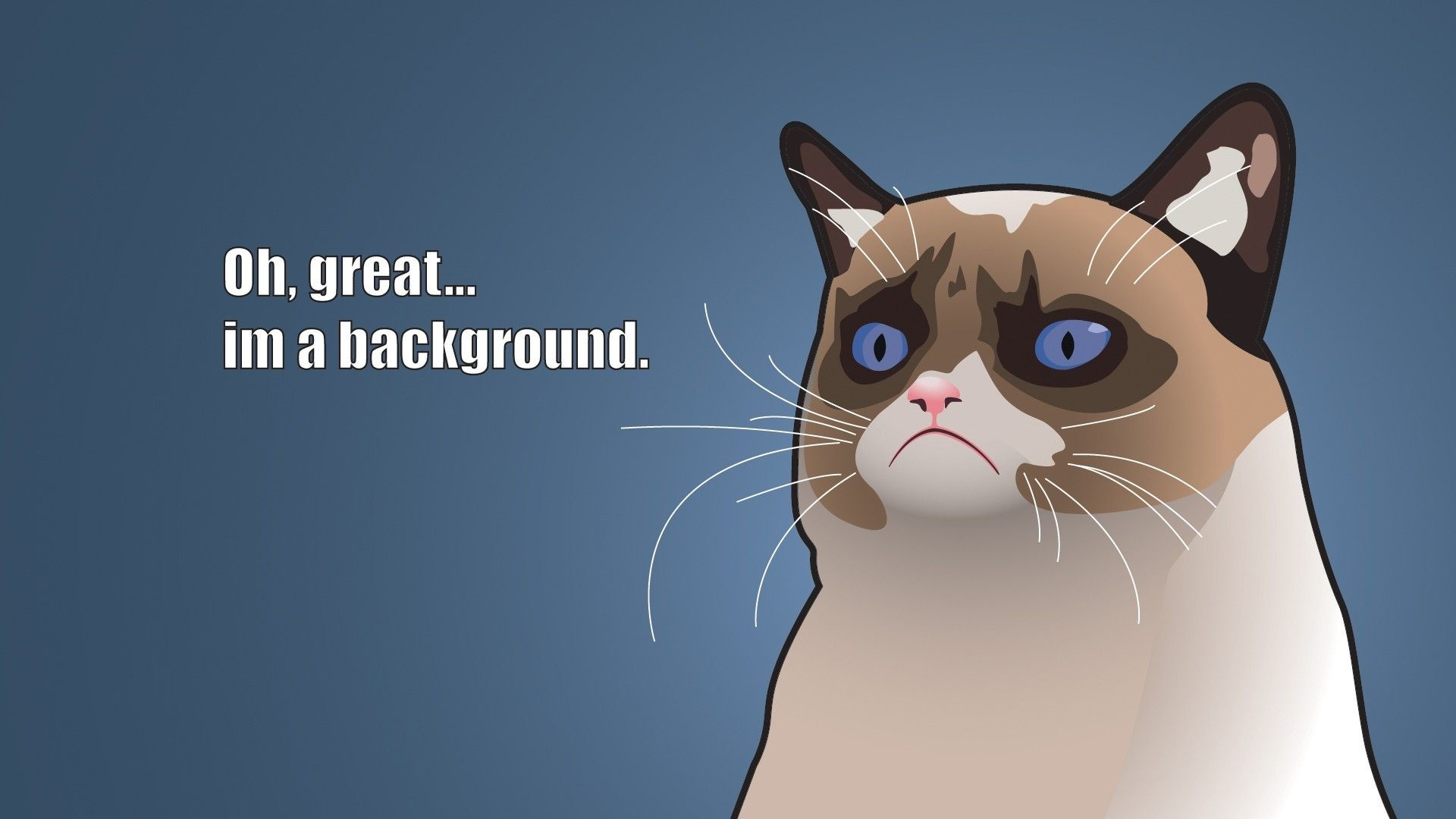 1920x1080 Funny Cat iPhone Wallpaper 1920×1200 Funny Cat Backgrounds (47 Wallpapers)  | Adorable