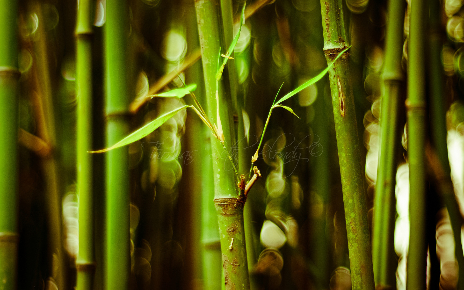 1920x1200 Download: Bamboo HD Wallpaper