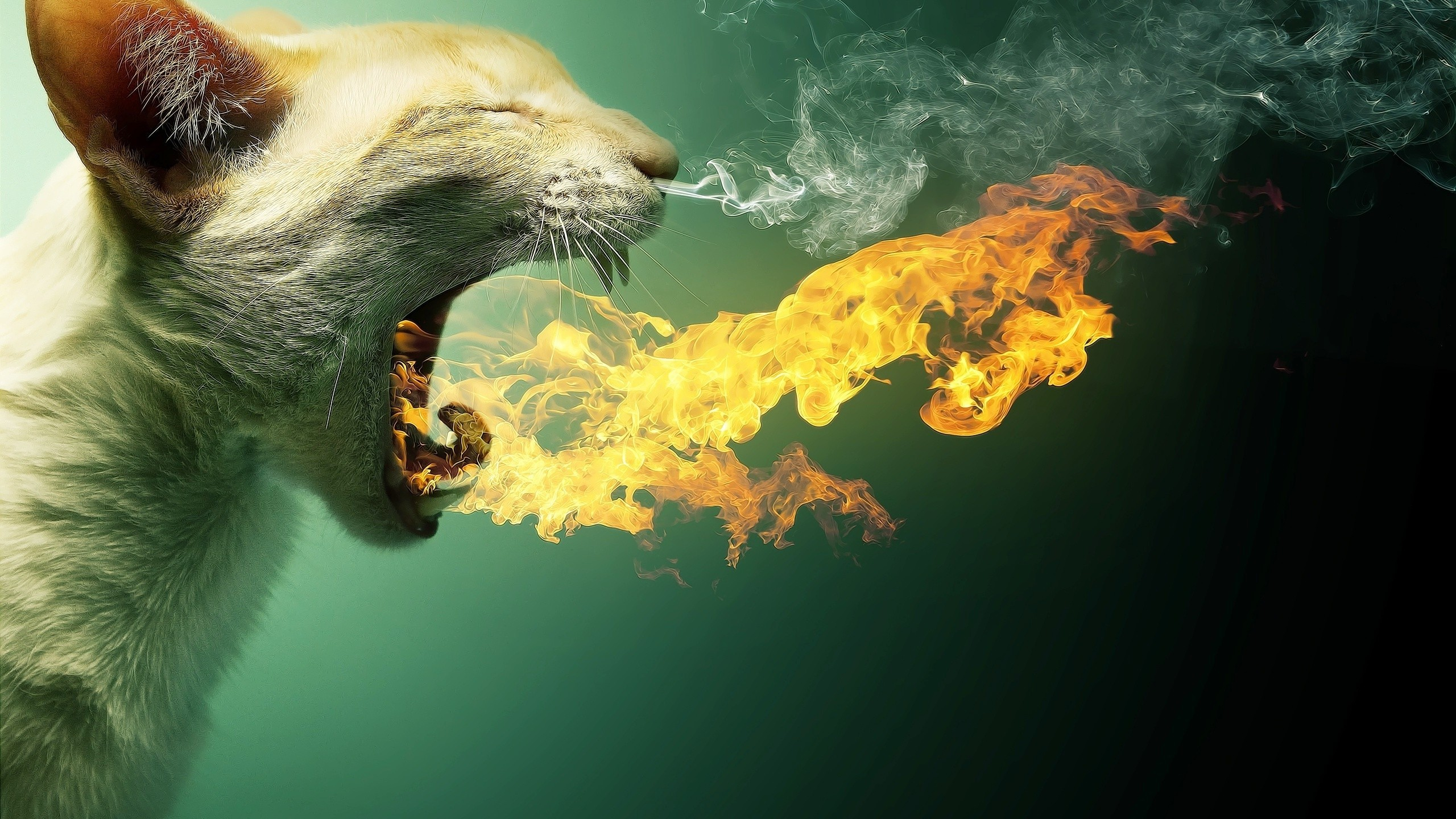 2560x1440 Download Flaming Cat Wide Wallpaper HD #1v20bw  px 864.26 KB  Abstract Animals