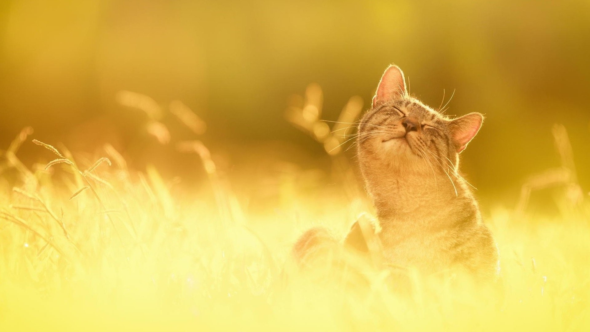 1920x1080 Nature cat cute sunshine summer wallpaper |  | 818129 | WallpaperUP