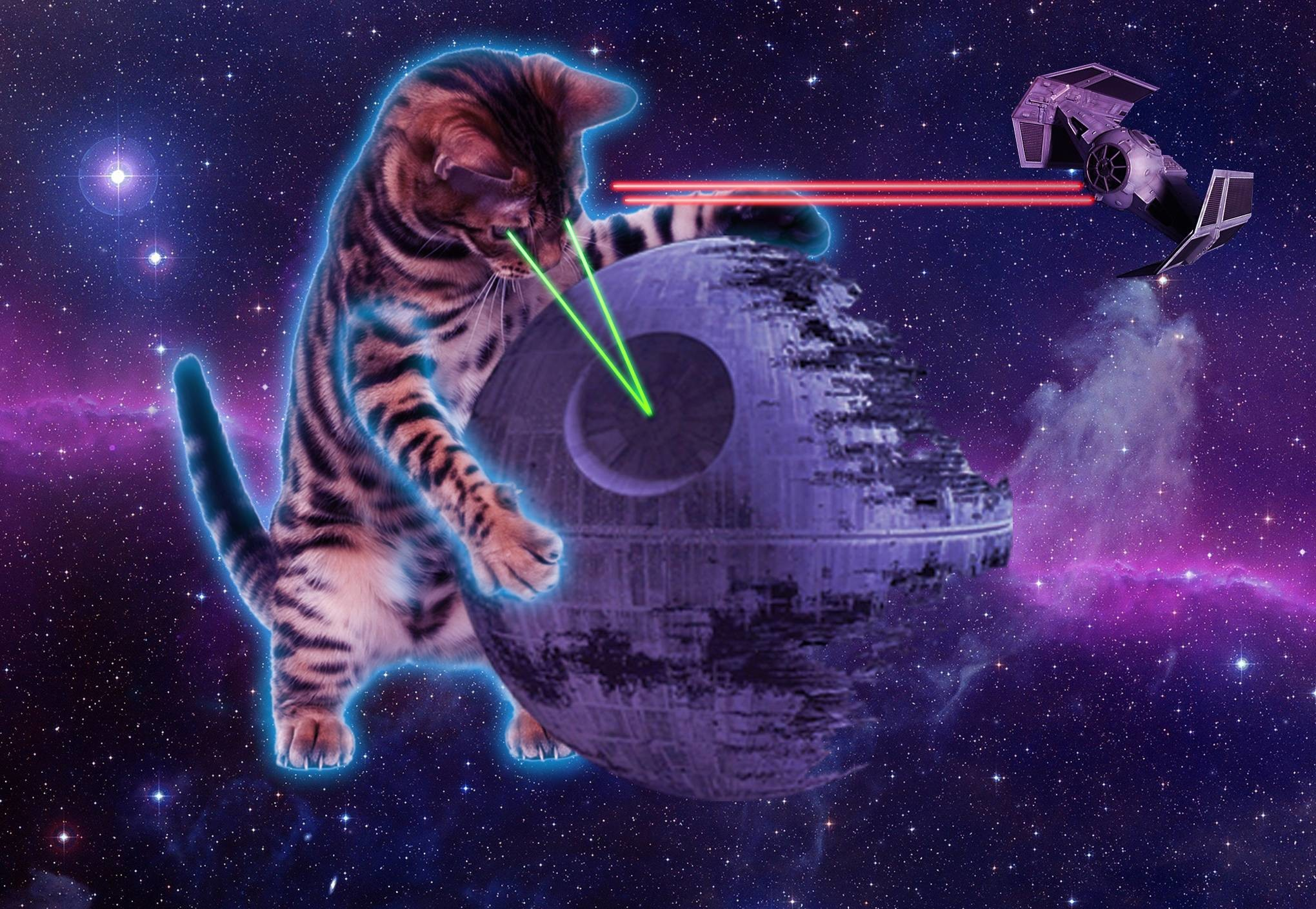 2040x1409 Space Cat Wallpapers Free