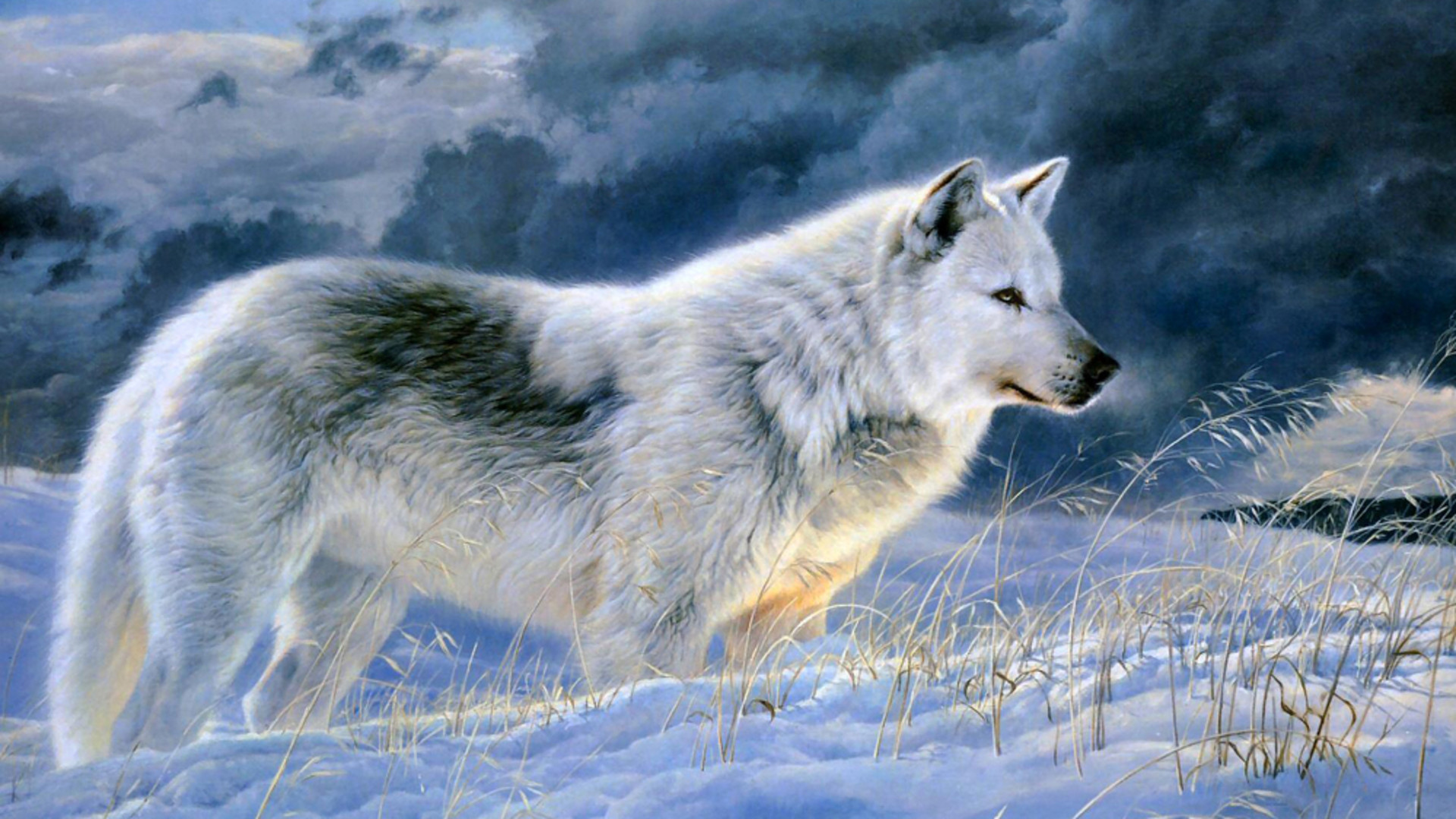 1920x1080 Dudespie images Wolves HD wallpaper and background photos