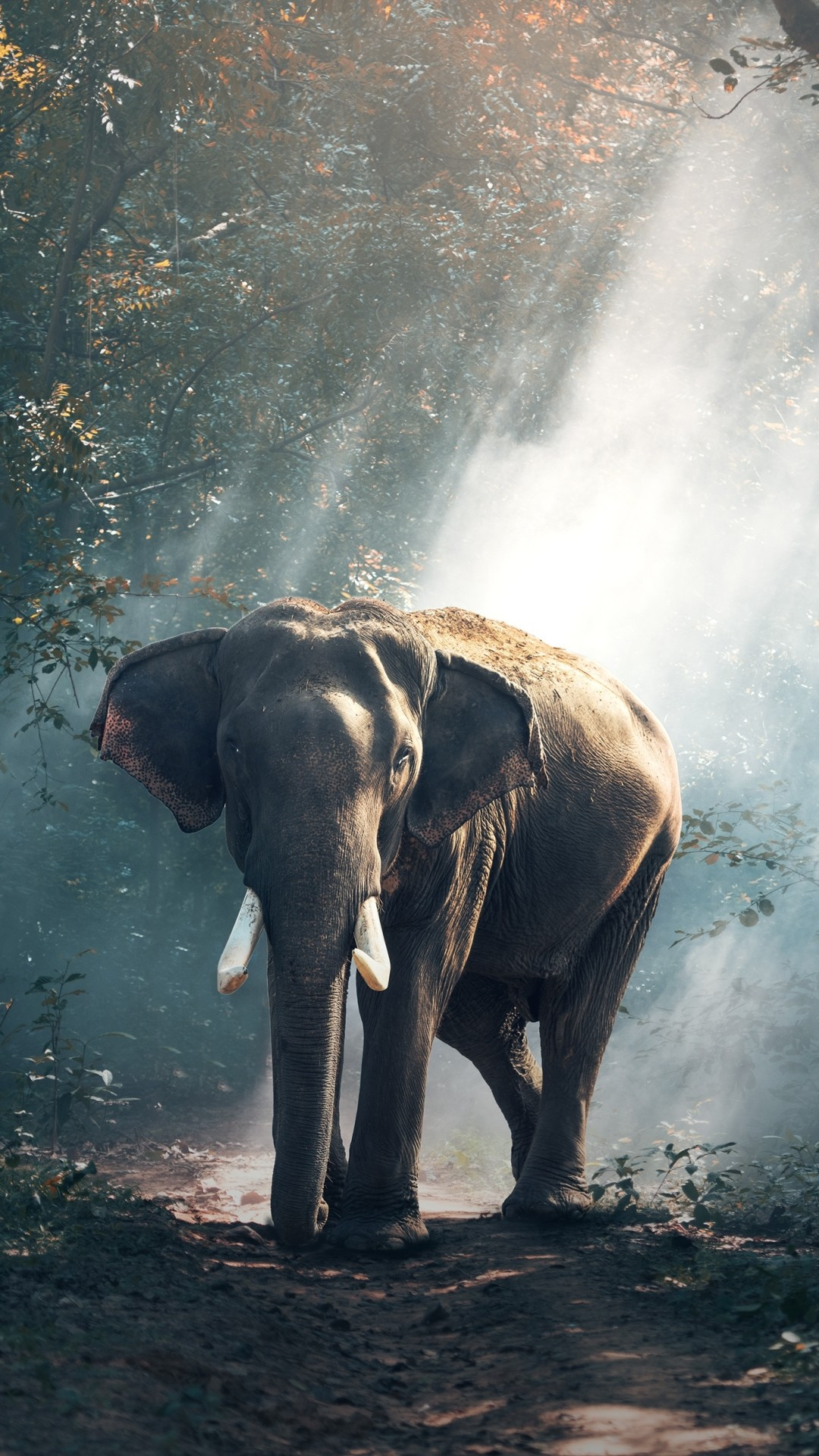 Elephant screensavers and wallpaper 69 images - Elephant background iphone ...