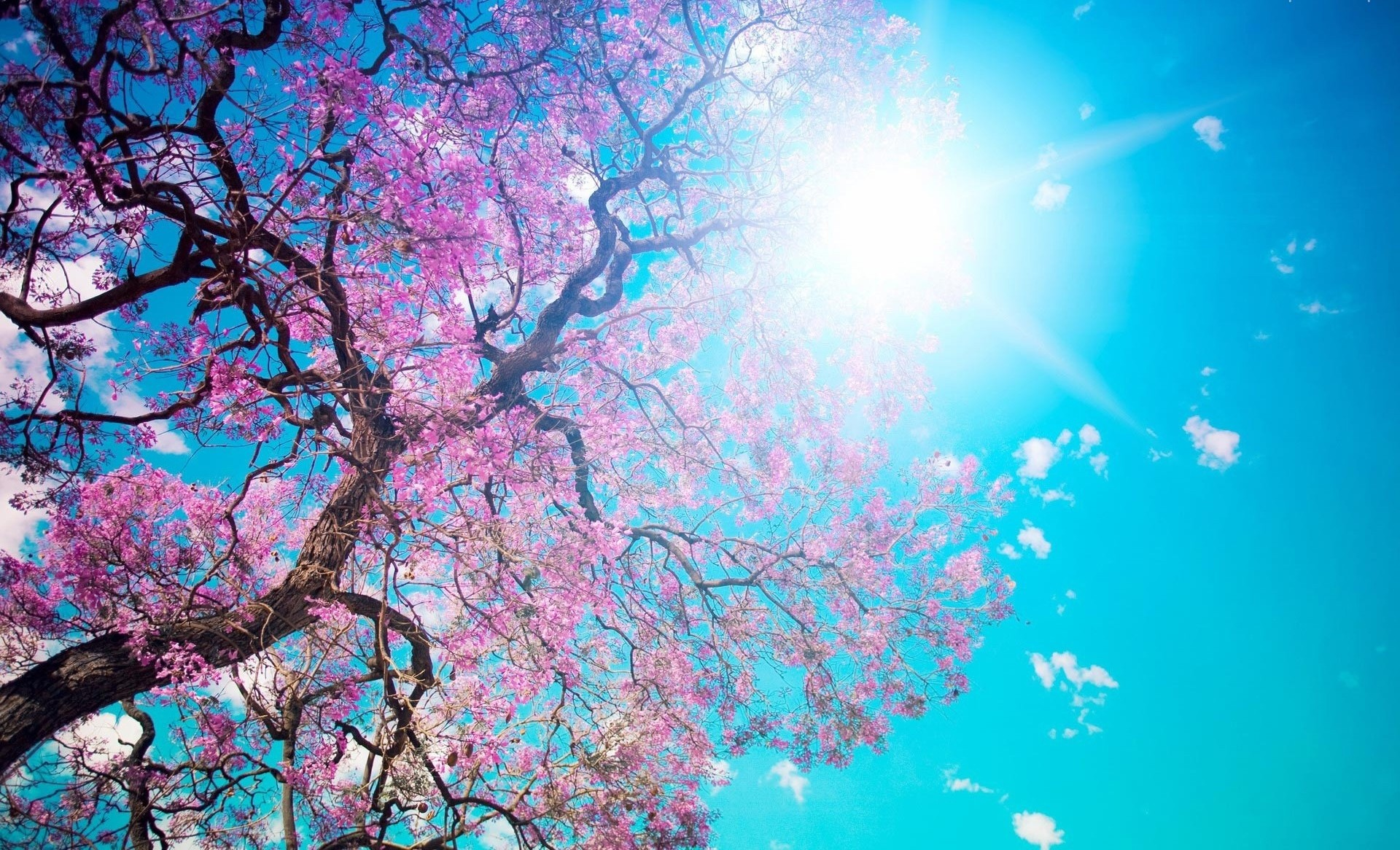 1920x1166 Spring-Trees-And-Flowers-Background-Image-3.jpg