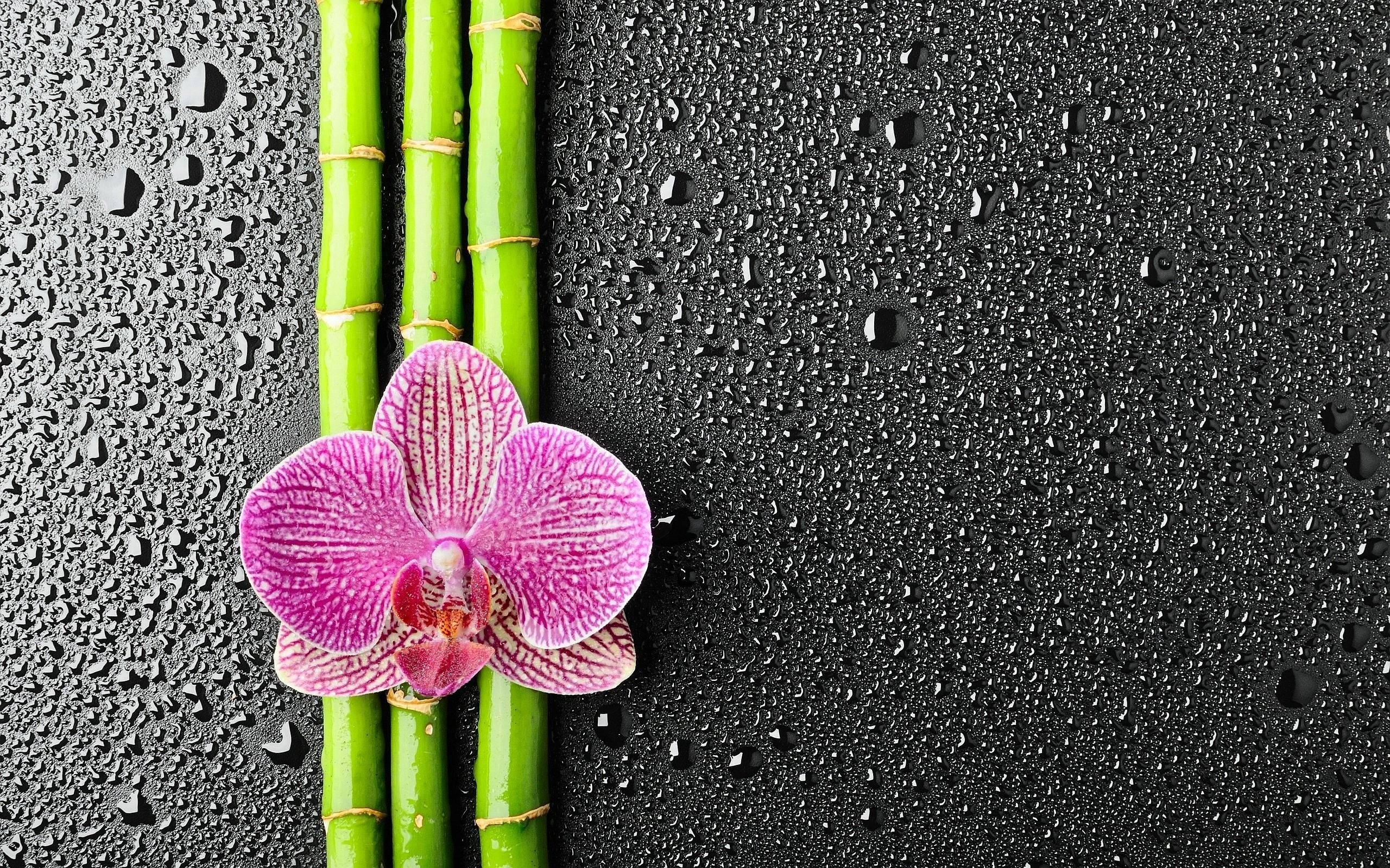 2560x1600 Bamboo Wallpaper HD 42173