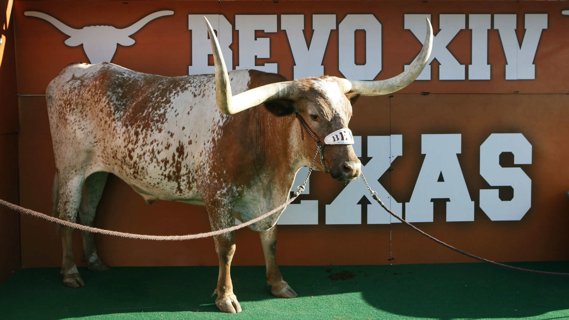 1920x1080 Texas Longhorns mascot Bevo retires after cancer diagnosis | NCAA Football  | Sporting News