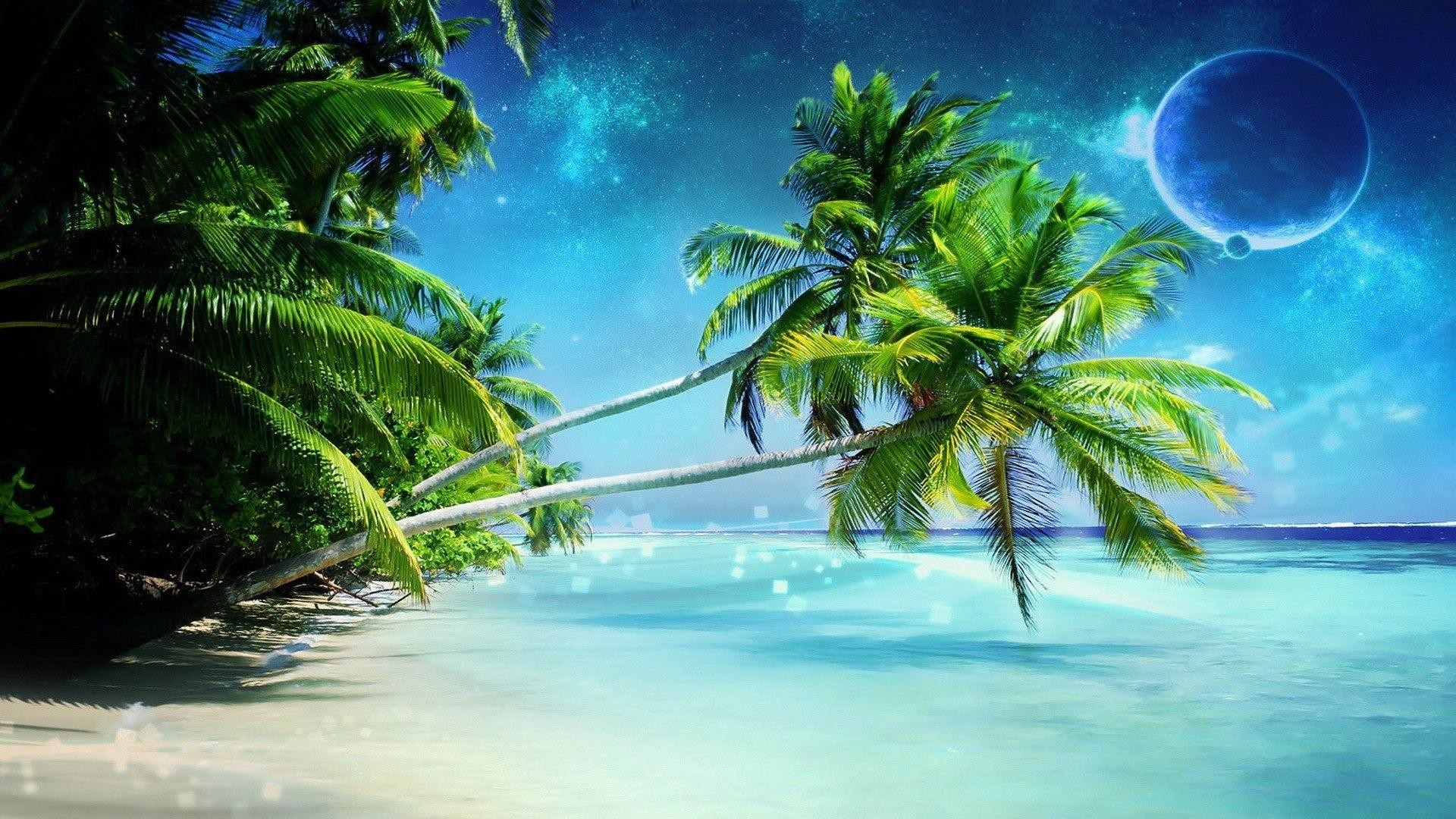 10 Most Popular Beautiful Beach Backgrounds Palm Trees: Palm Tree Wallpaper (68+ Images