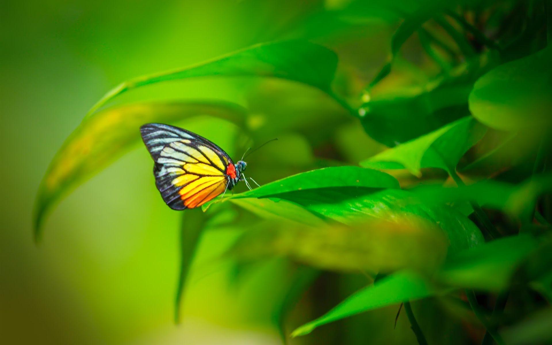 Green Butterfly Wallpaper (52+ images)3d Neon Butterflies