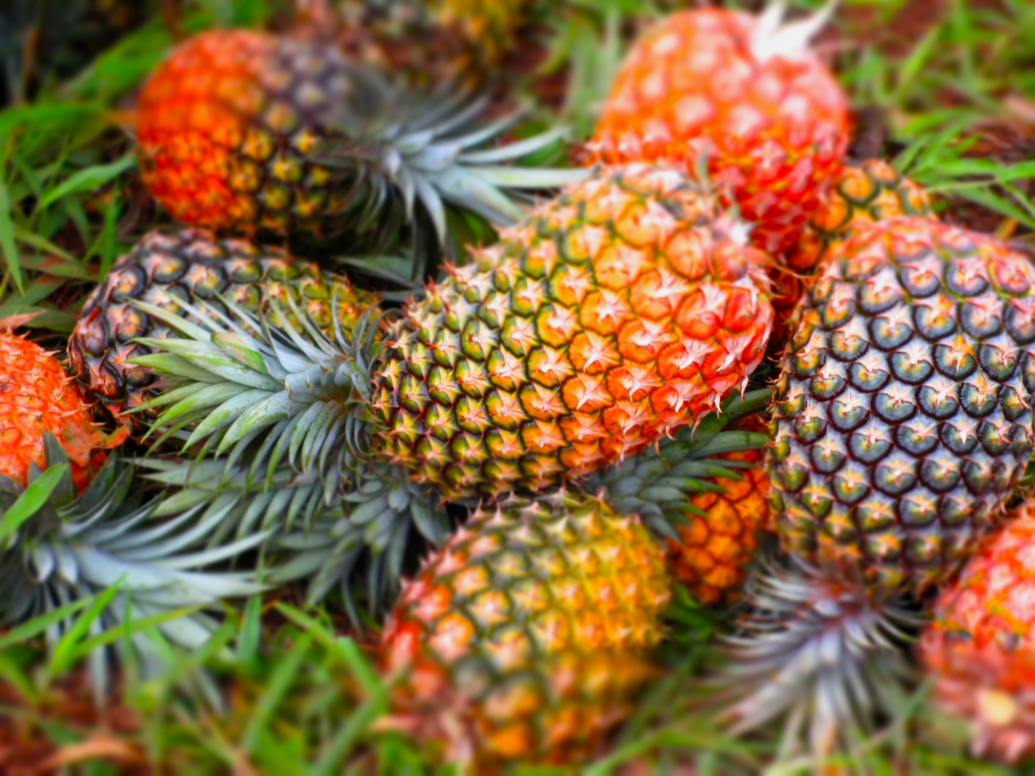 saccarification of pineapple