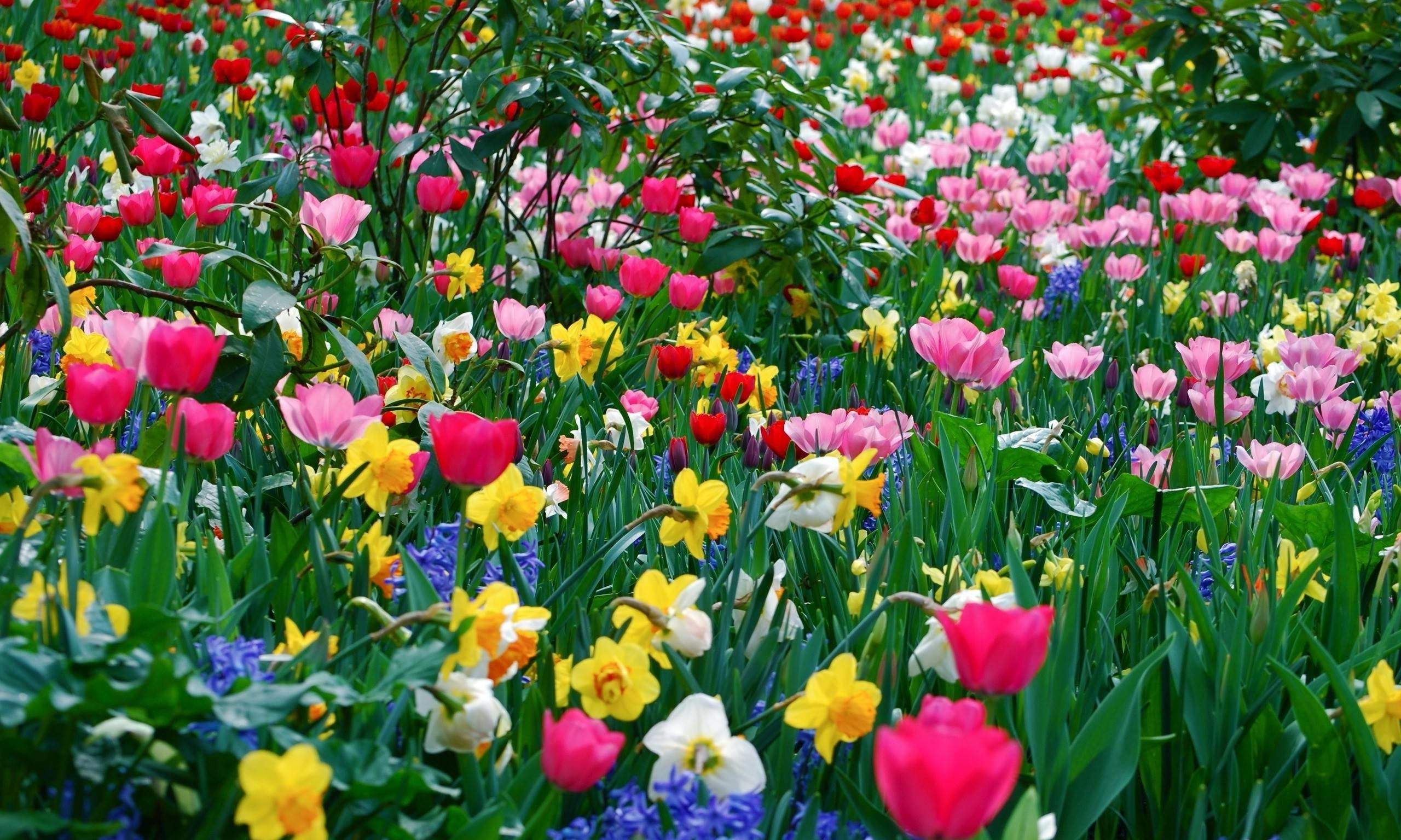 Spring flowers background 52 images 2560x1536 picture cool backgrounds spring flower wallpapers hd wallpapers mightylinksfo