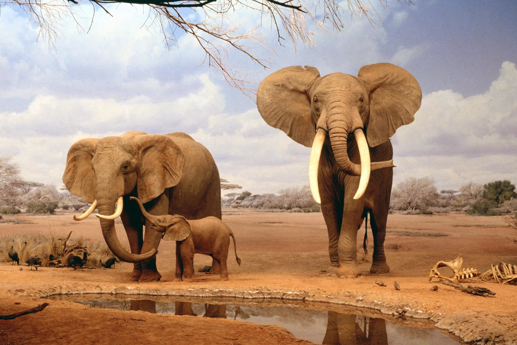1999x1333 Africa Elephants Summer Animals Desktop Wallpaper | Full HD Wallpapers .