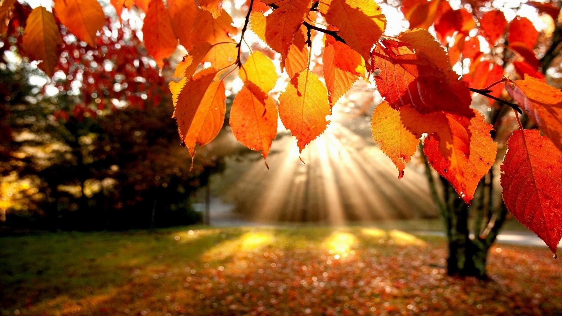Cute Fall Wallpaper Backgrounds 60 Images