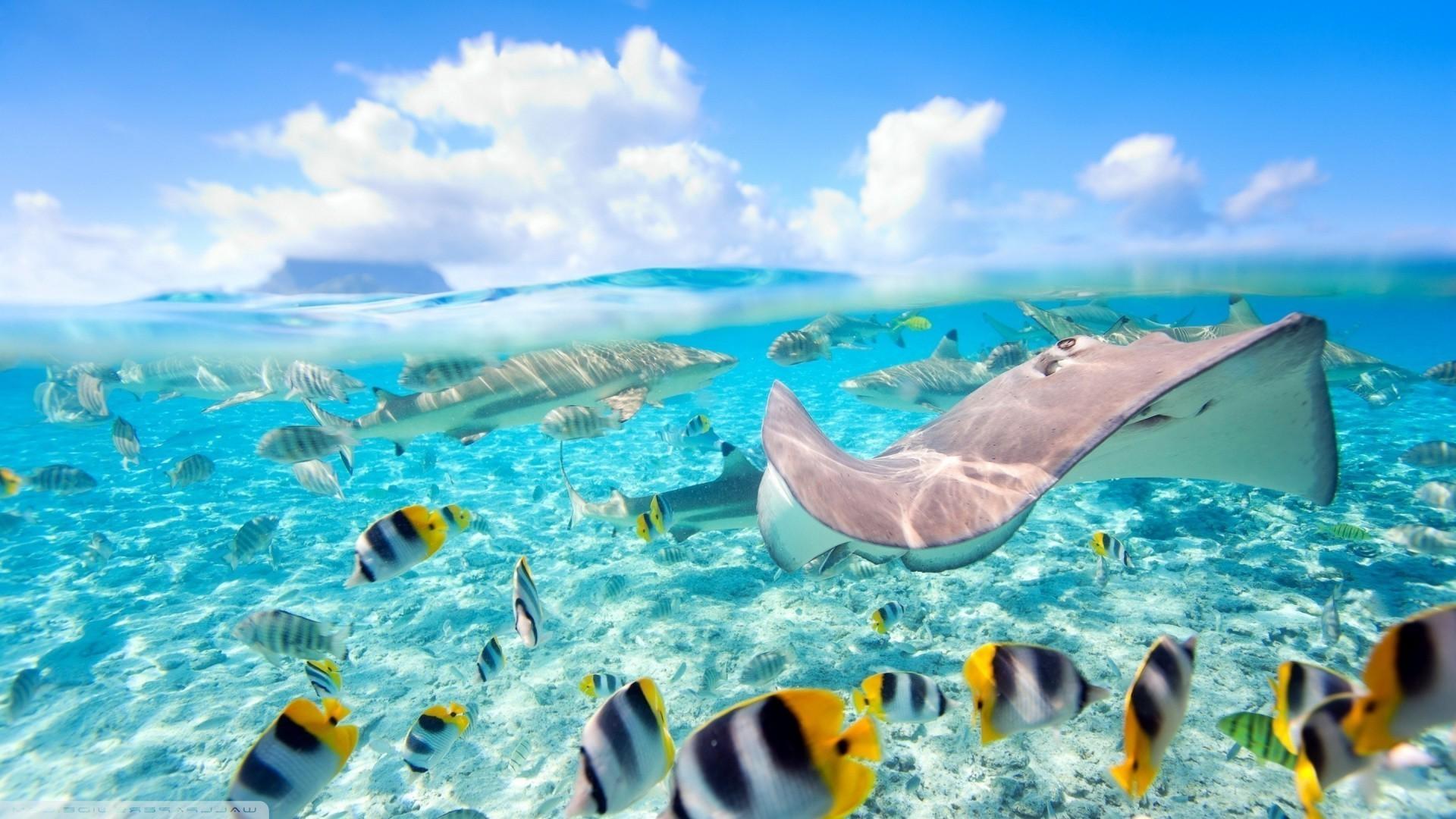 Bora Bora Wallpaper 70 Images