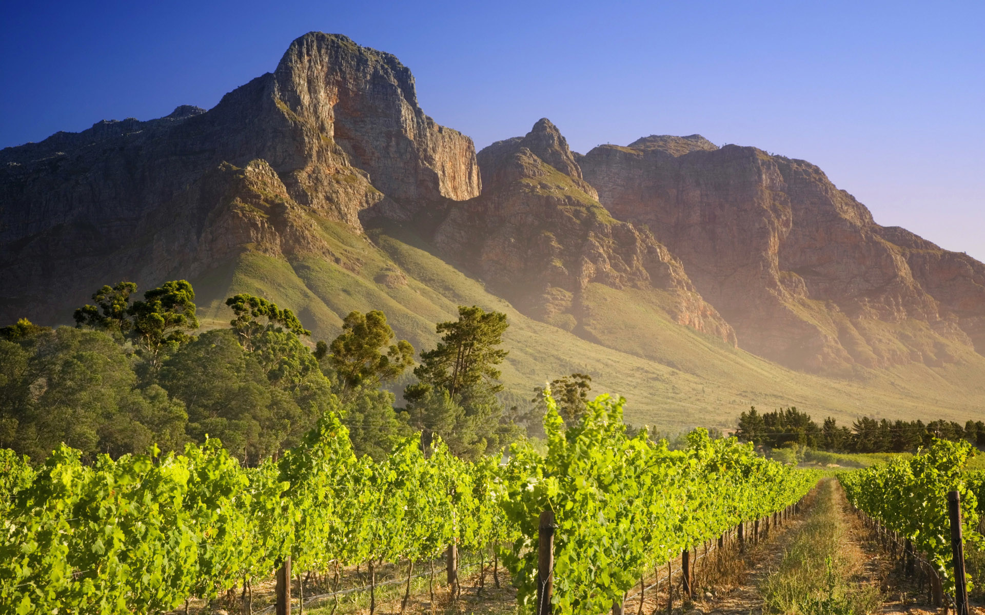 1920x1200 Vineyard HD Wallpaper | Background Image |  | ID:335225 - Wallpaper  Abyss