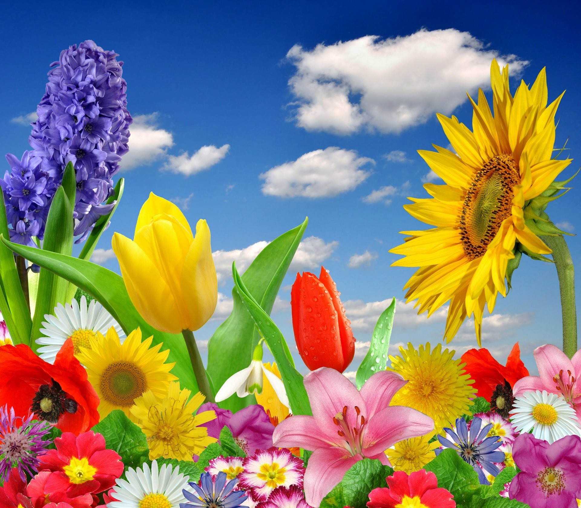 1920x1680 spring flowers colorful blossom bright flower butterfly spring bloom