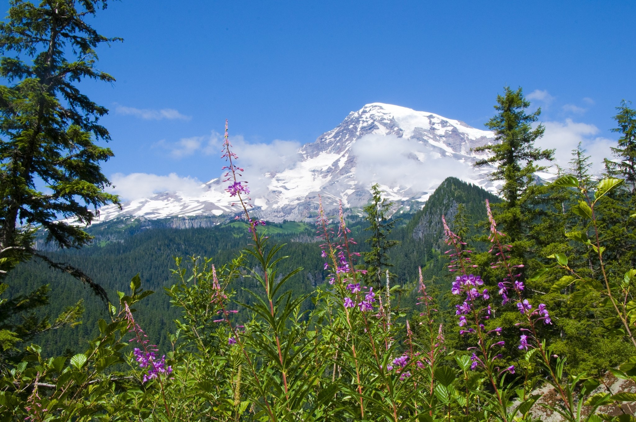 2048x1360 National park mount rainier national park, Flowers, Forests, Mountains  wallpaper and background