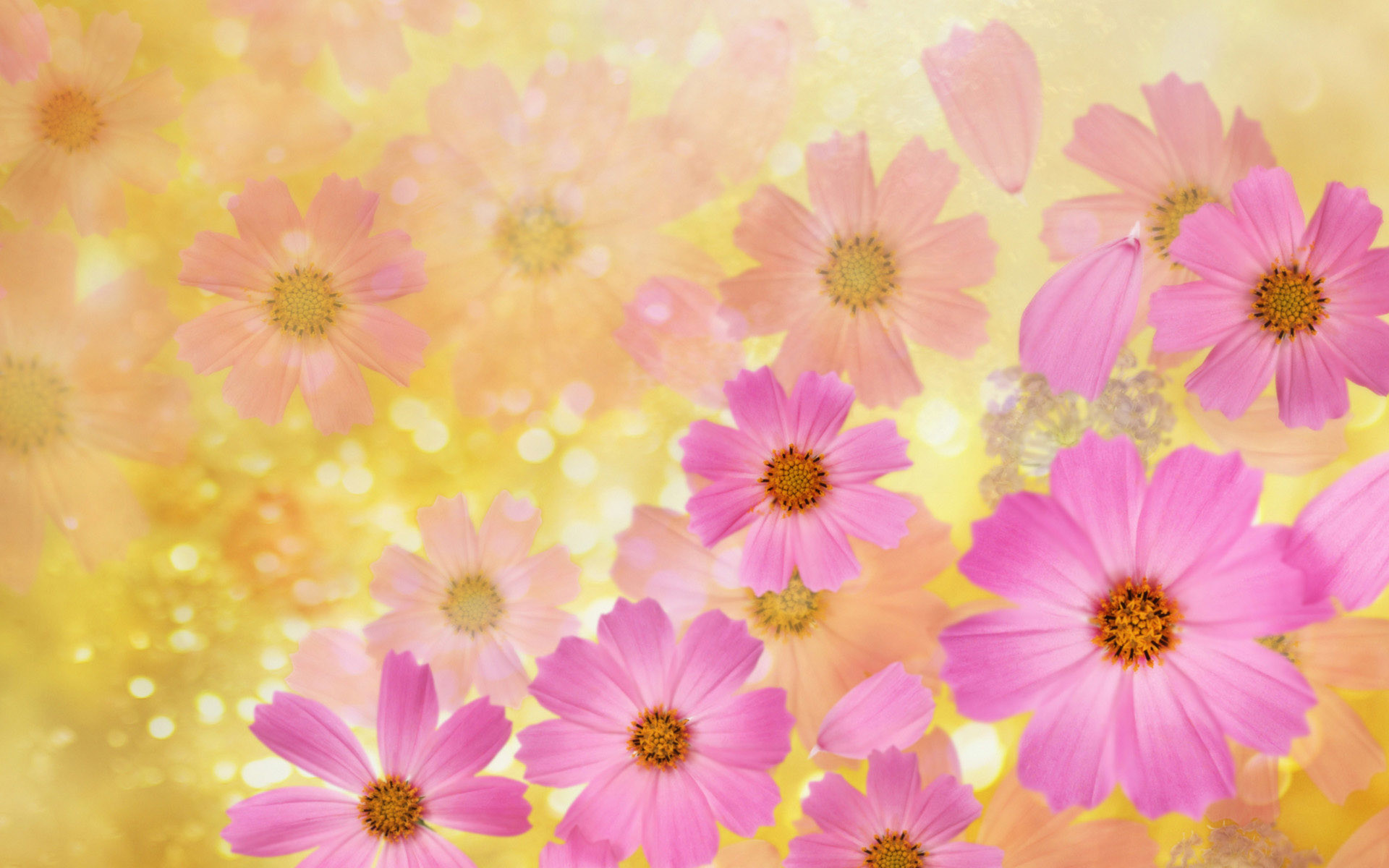 1920x1200 flower backgrounds | Cosmos flowers Wallpaper | High Quality  Wallpapers,Wallpaper Desktop .
