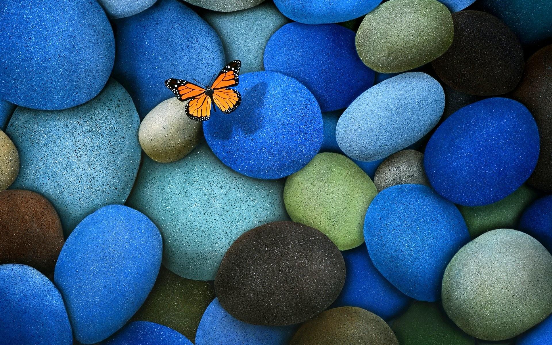 Butterfly Desktop Wallpaper 62 Images