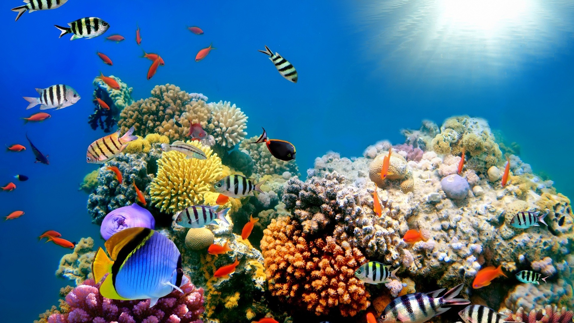 1920x1080 Colorful Fish Sea Creature High Quality HD Wallpapers HD Famous 1920×1080  Sea Animals Pictures