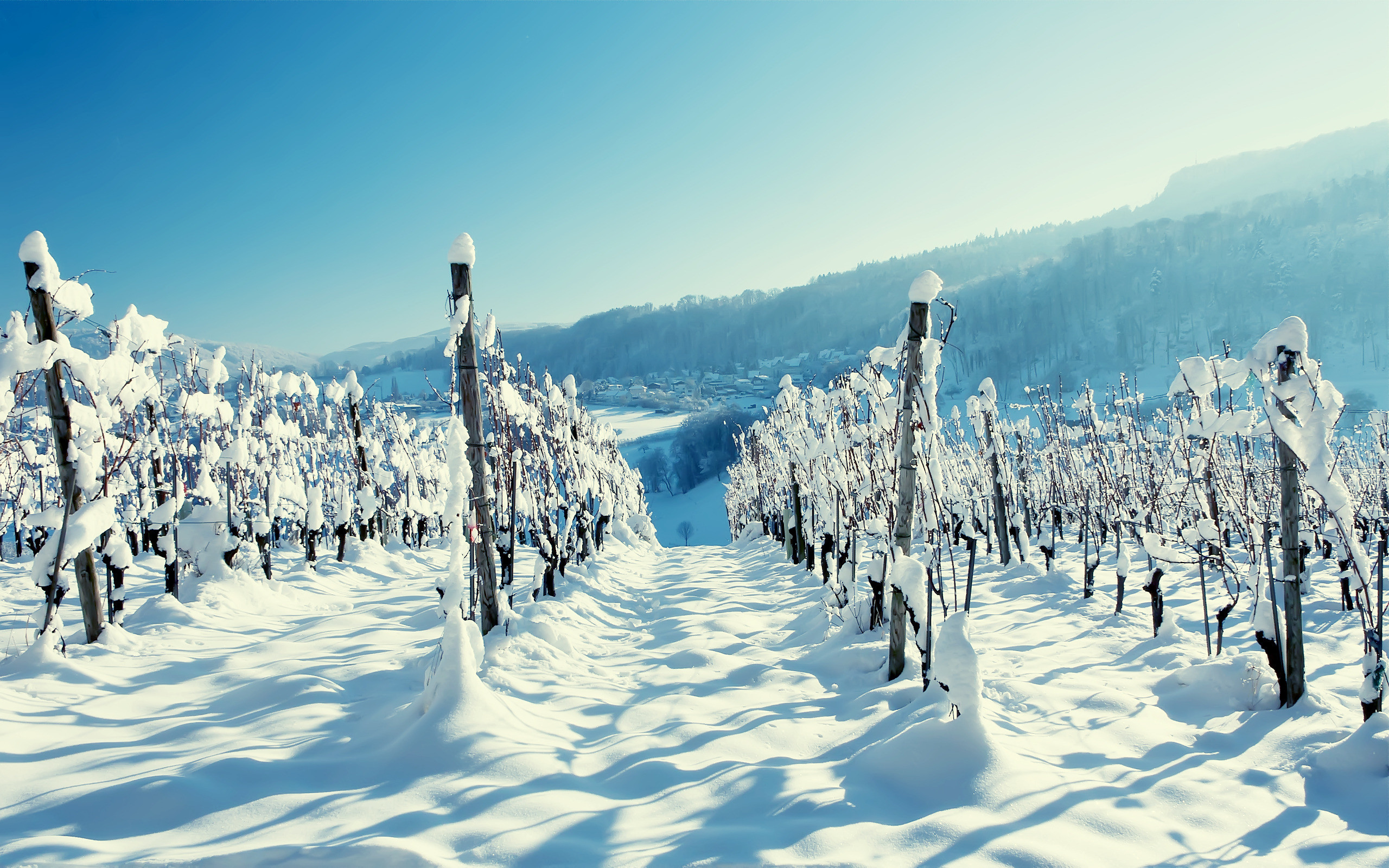 2560x1600 Snow in the Vineyard Wallpaper