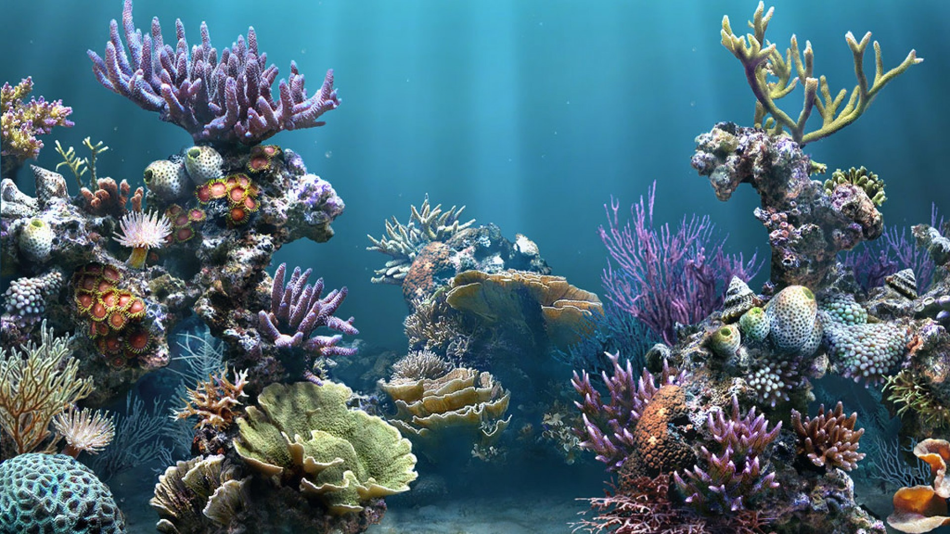 1920x1080 ... aquarium wallpaper free download for pc desktop live fish .