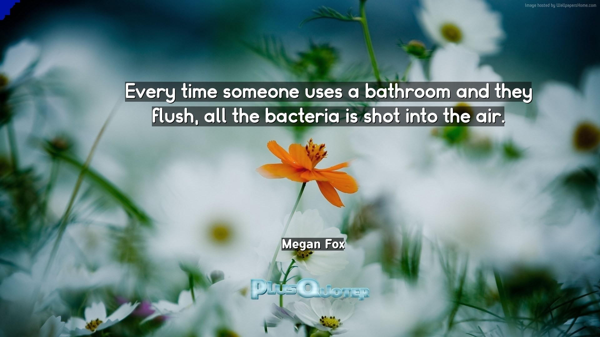 "1920x1080 Download Wallpaper with inspirational Quotes- ""Every time someone uses a  bathroom and they flush"