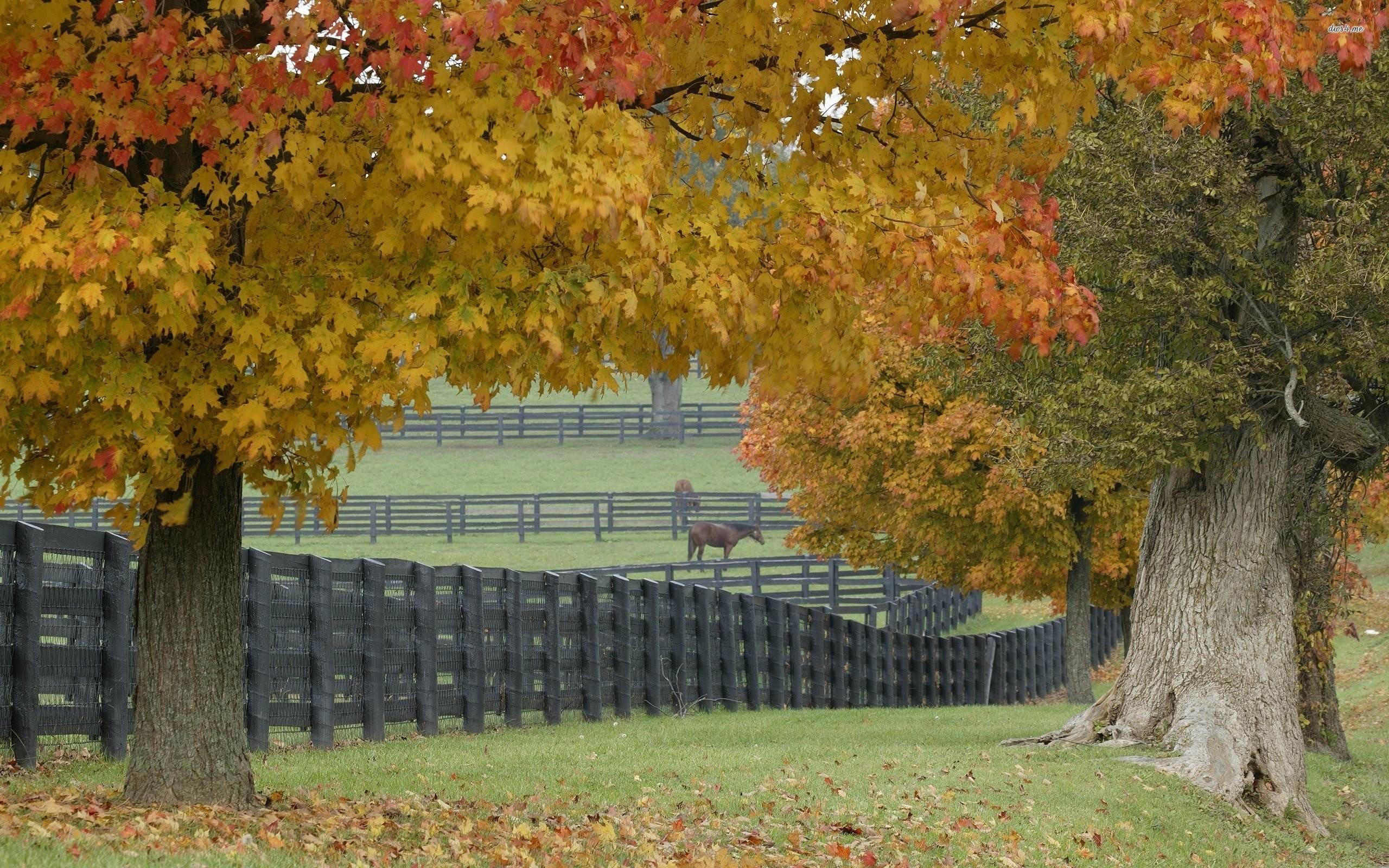Hd Farm Wallpaper 59 Images
