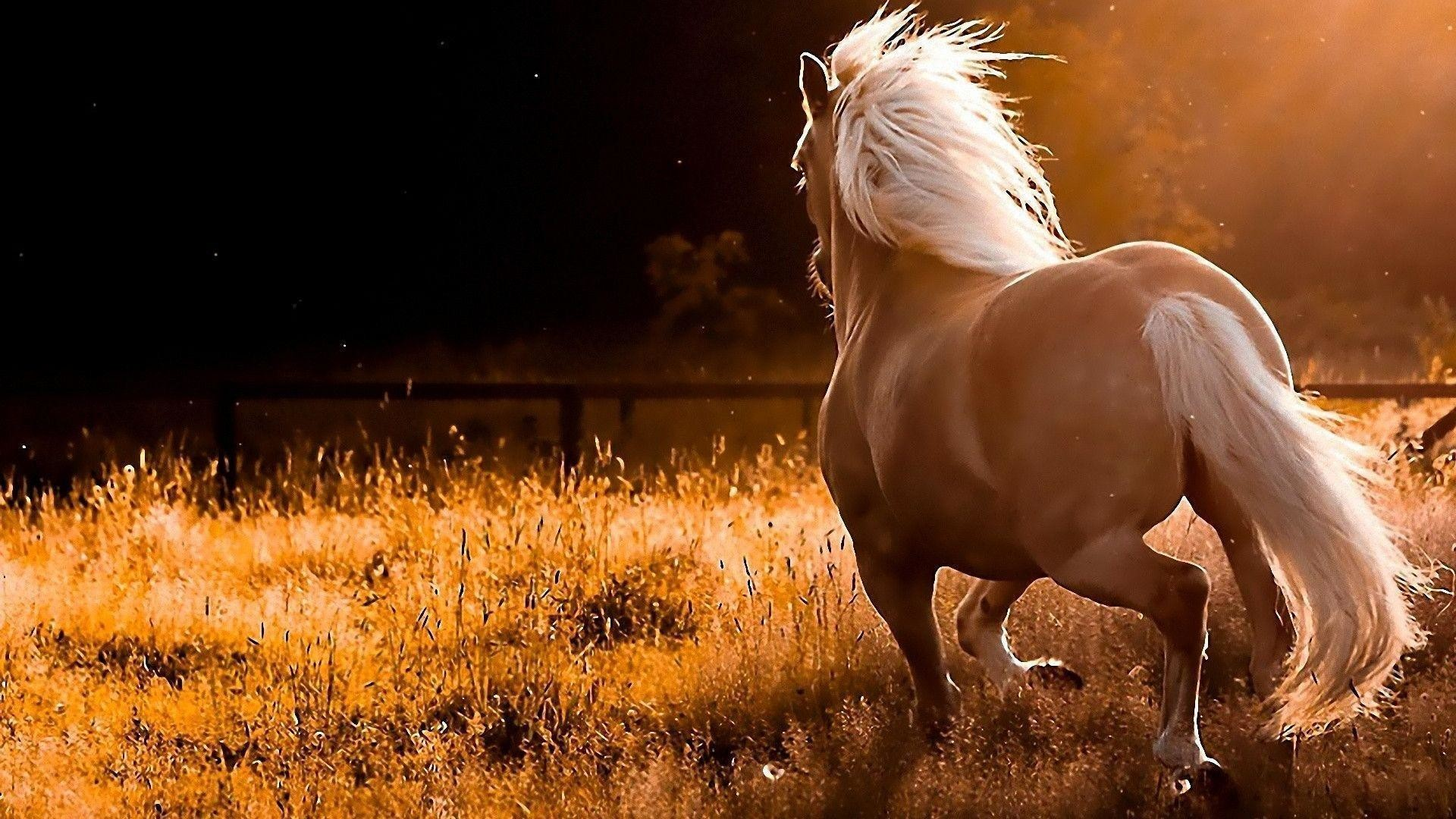 Fall horse wallpaper 42 images 1920x1080 white running horse wallpaper download hd wallpapers voltagebd Image collections