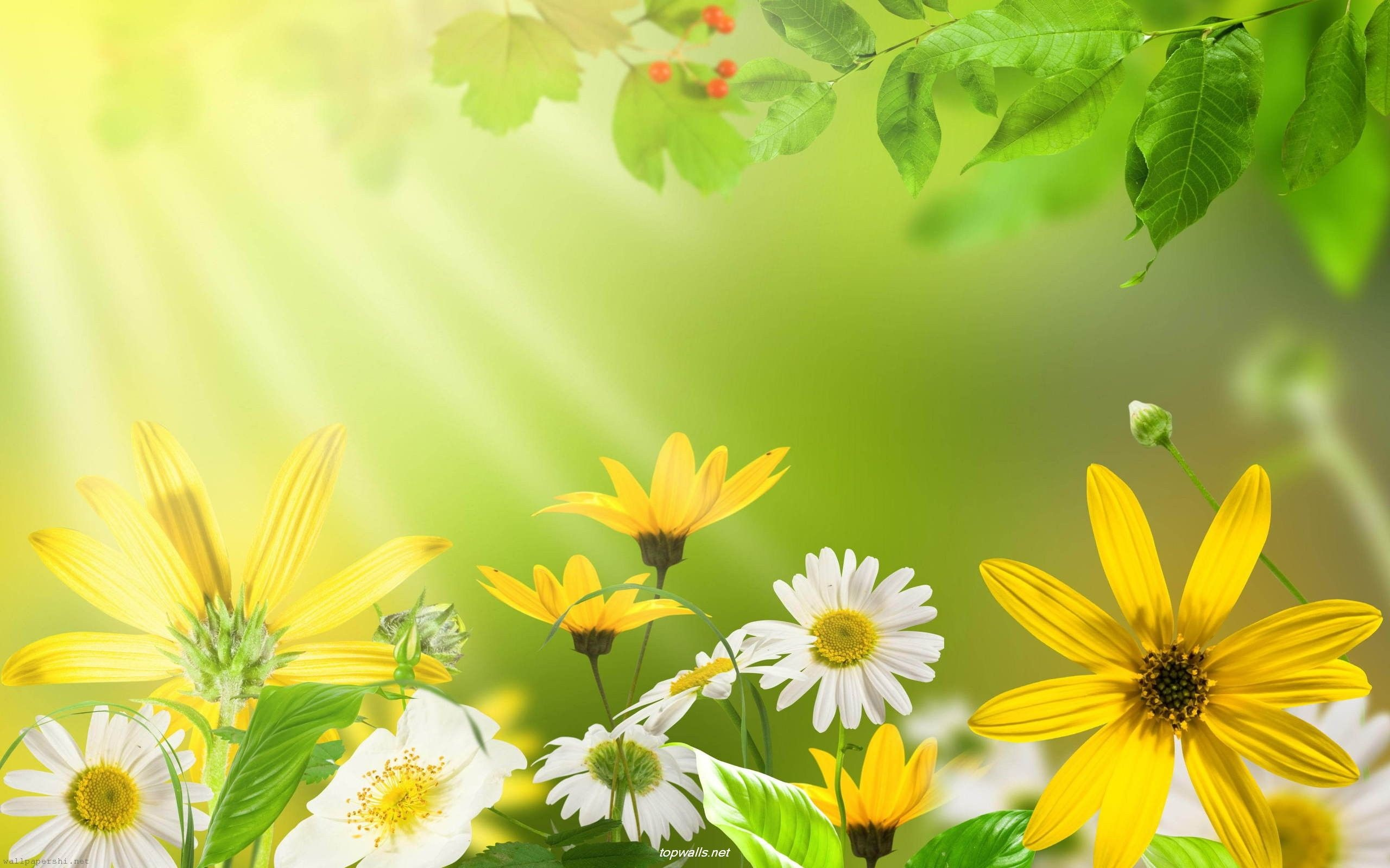 2560x1600 green flowers in summer Free Wallpaper