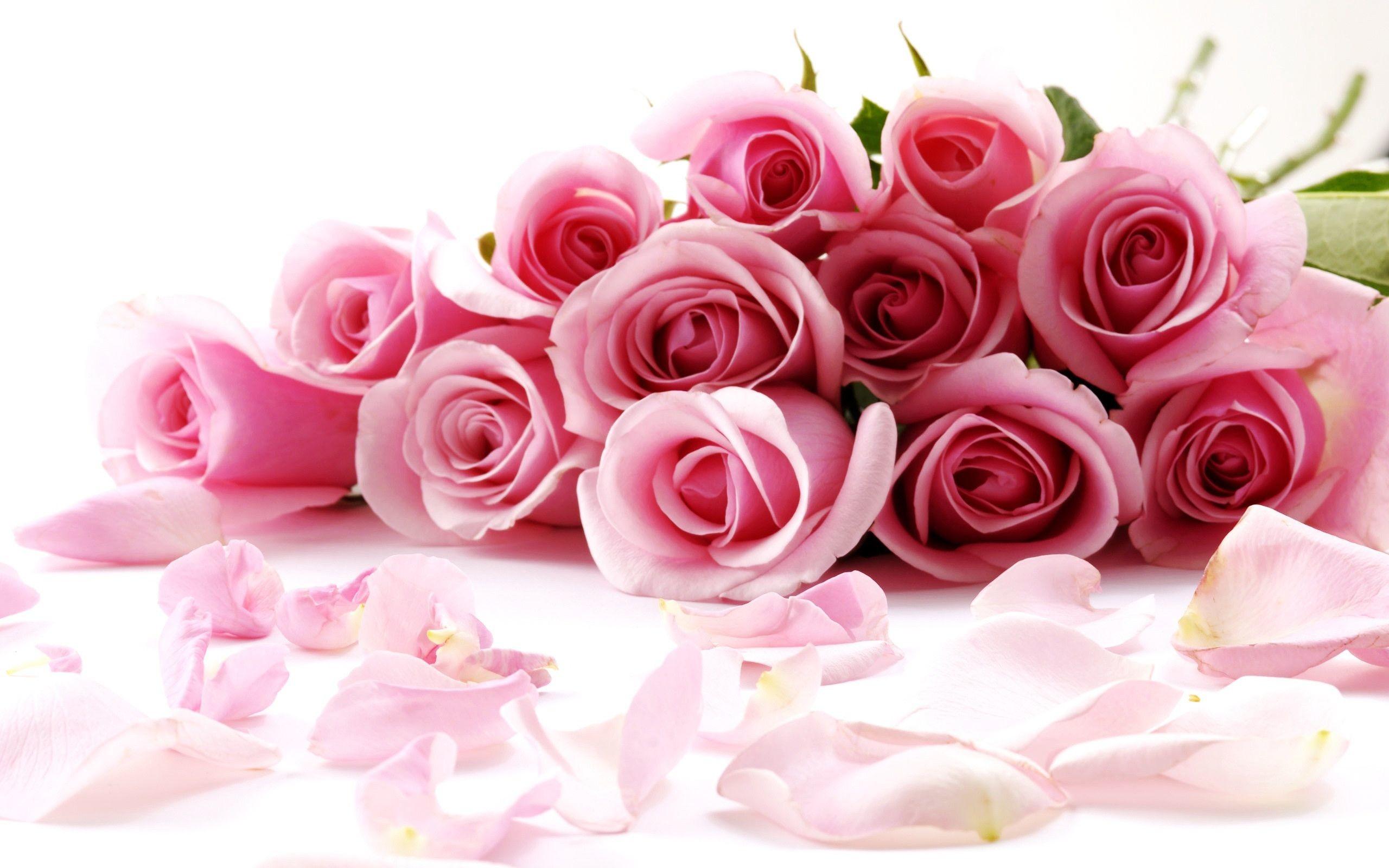 2560x1600 Rose Flowers Wallpaper For Desktop
