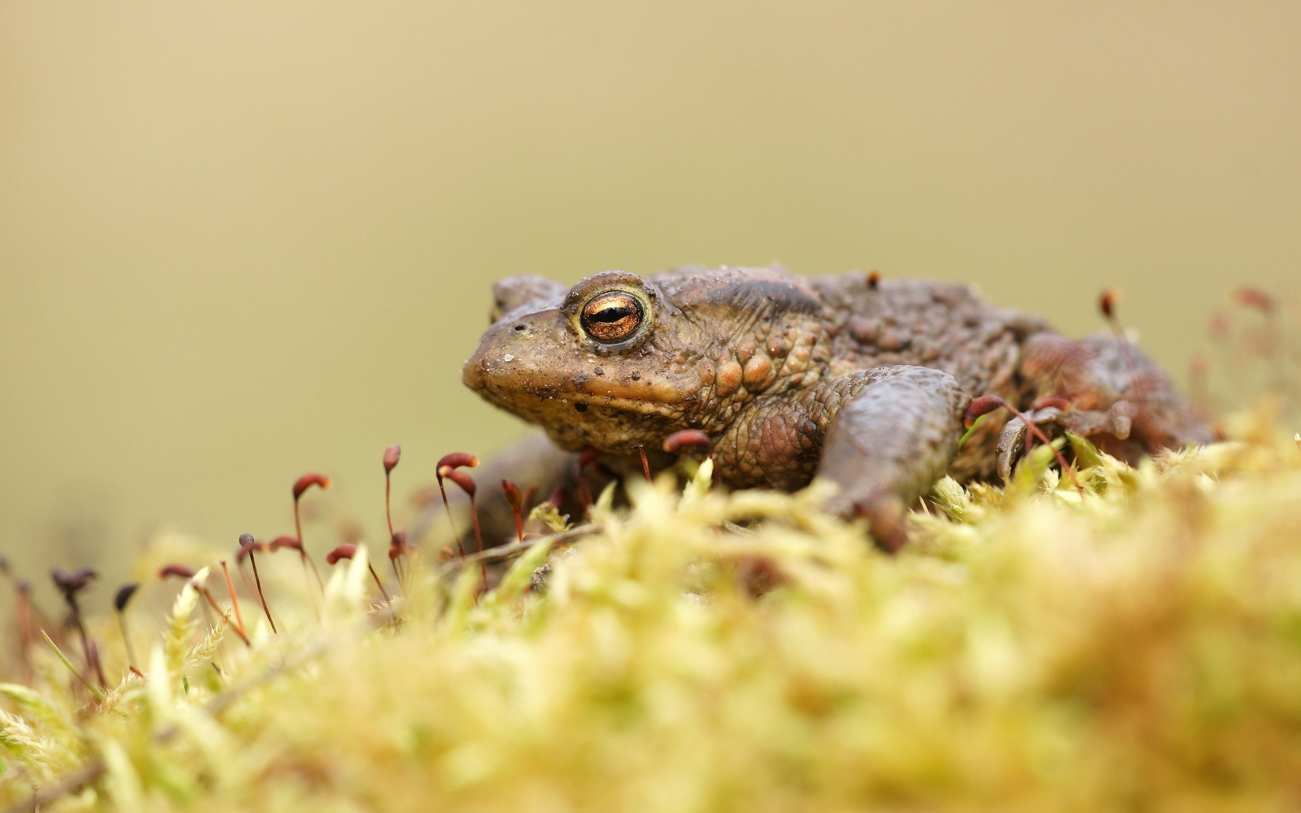 2560x1600  free pictures toad