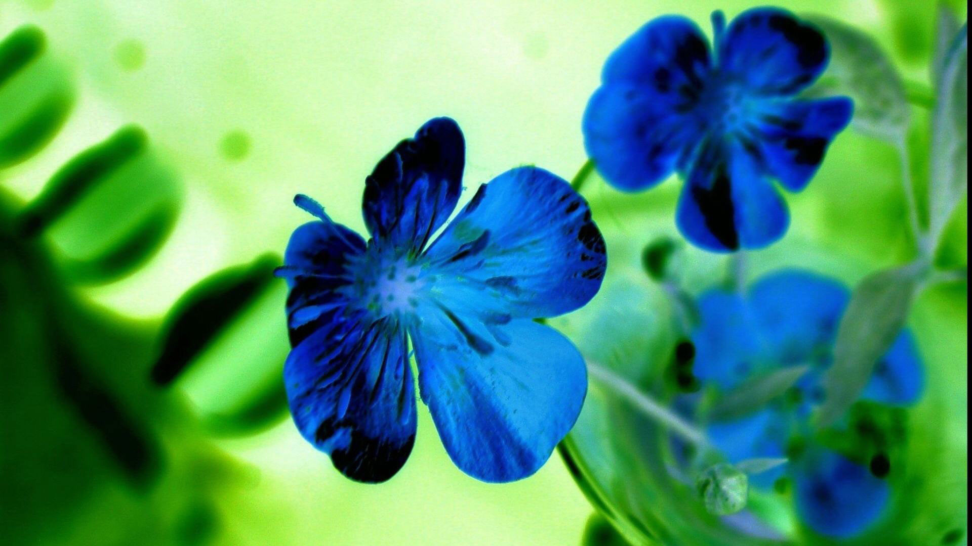 1920x1080 hd pics photos flowers blue green desktop background wallpaper