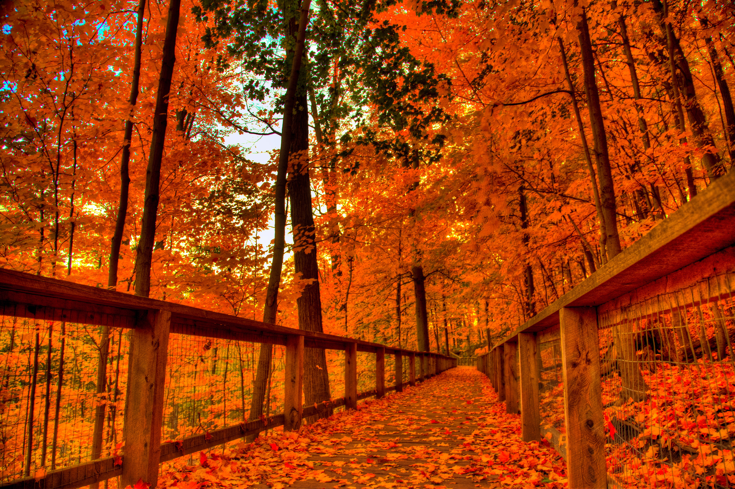Cool Fall Backgrounds (69+ Images
