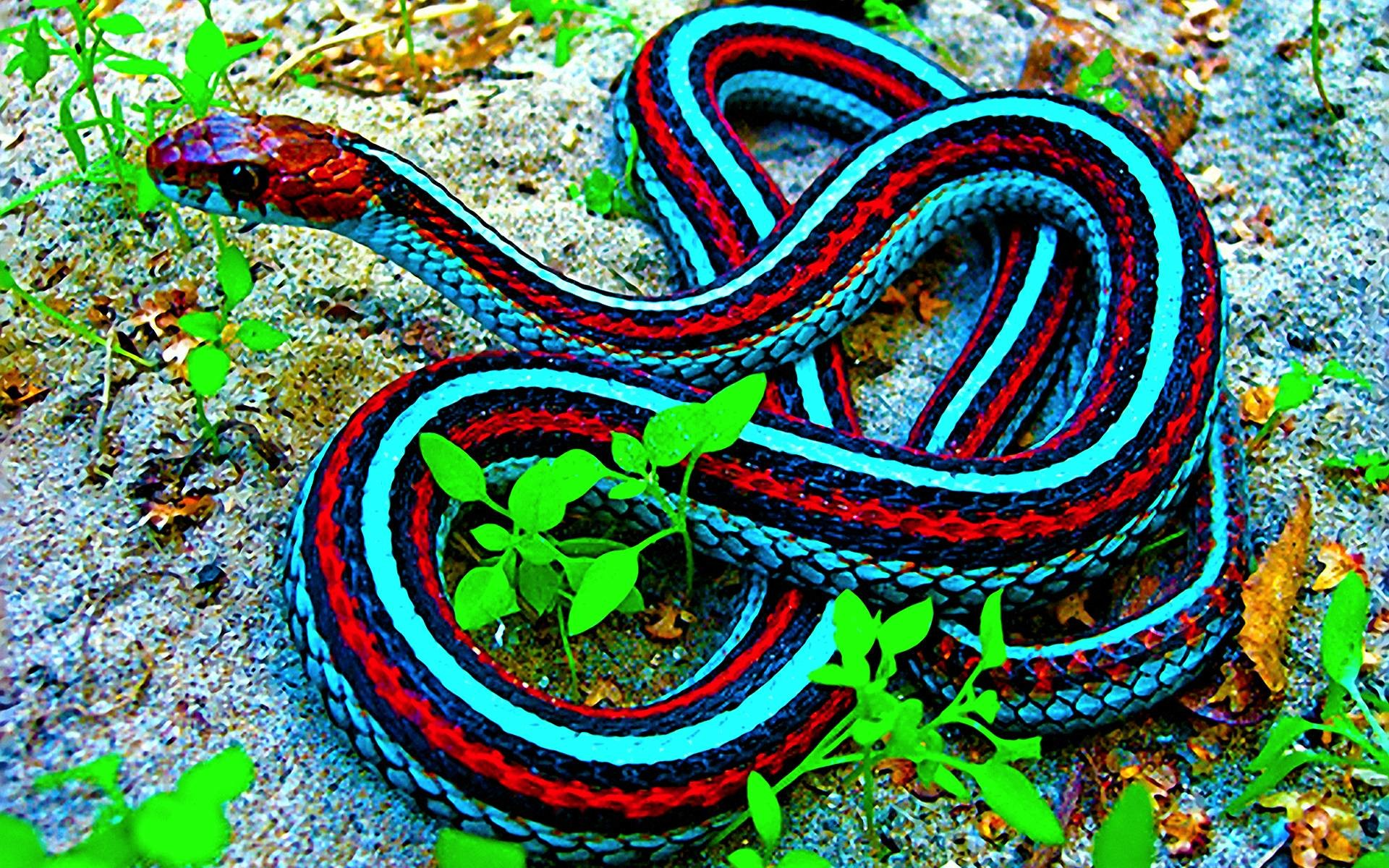 1920x1200 snakes images Snake HD wallpaper and background photos