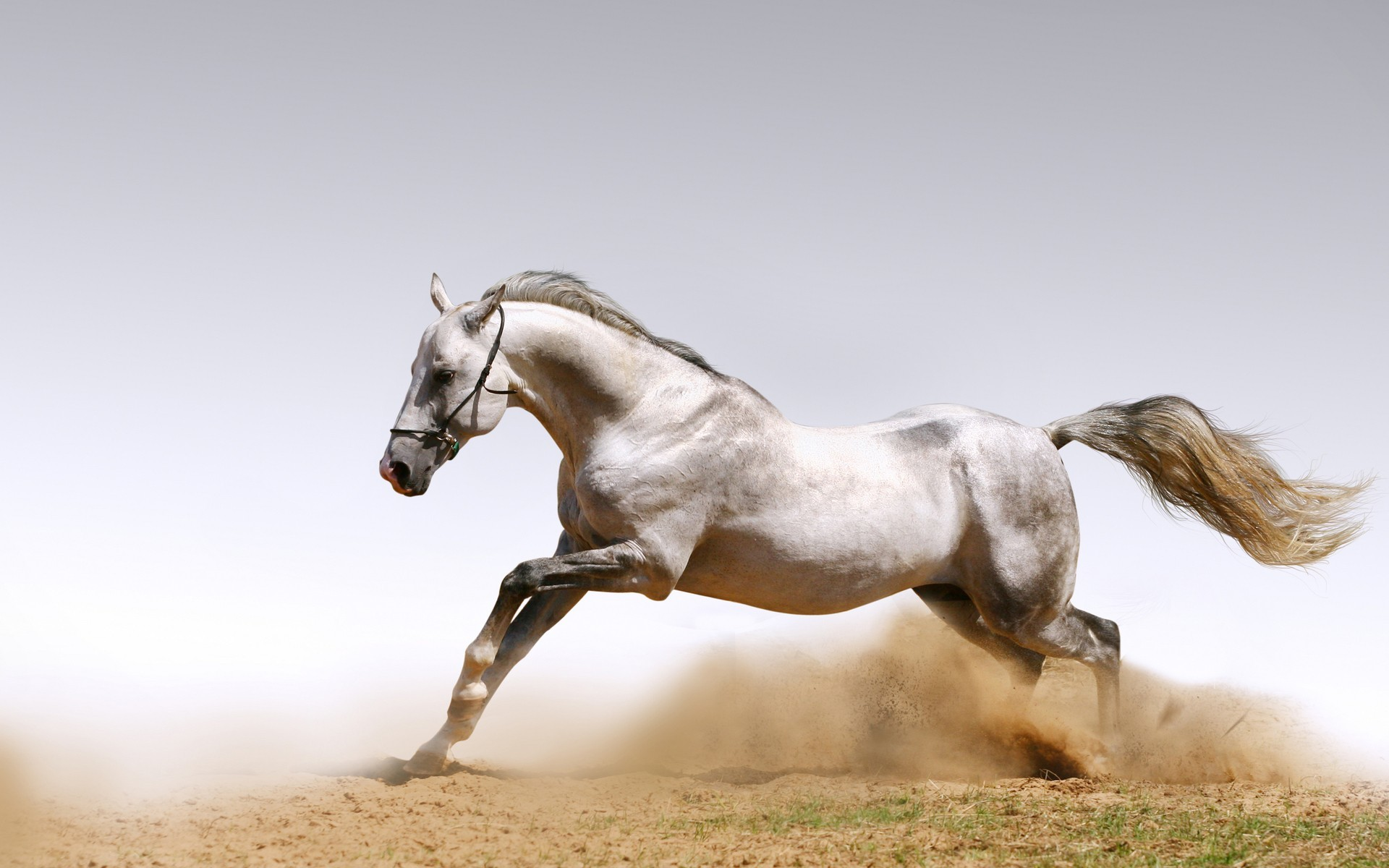 Horse Screensavers And Wallpaper 50 Images