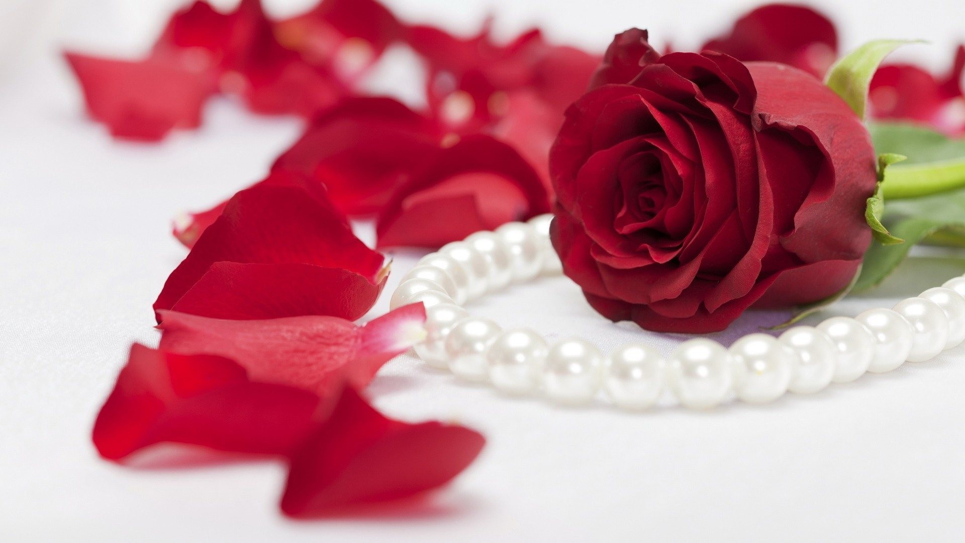 1920x1080 Red Rose Pearls 1920 x 1080 340x220