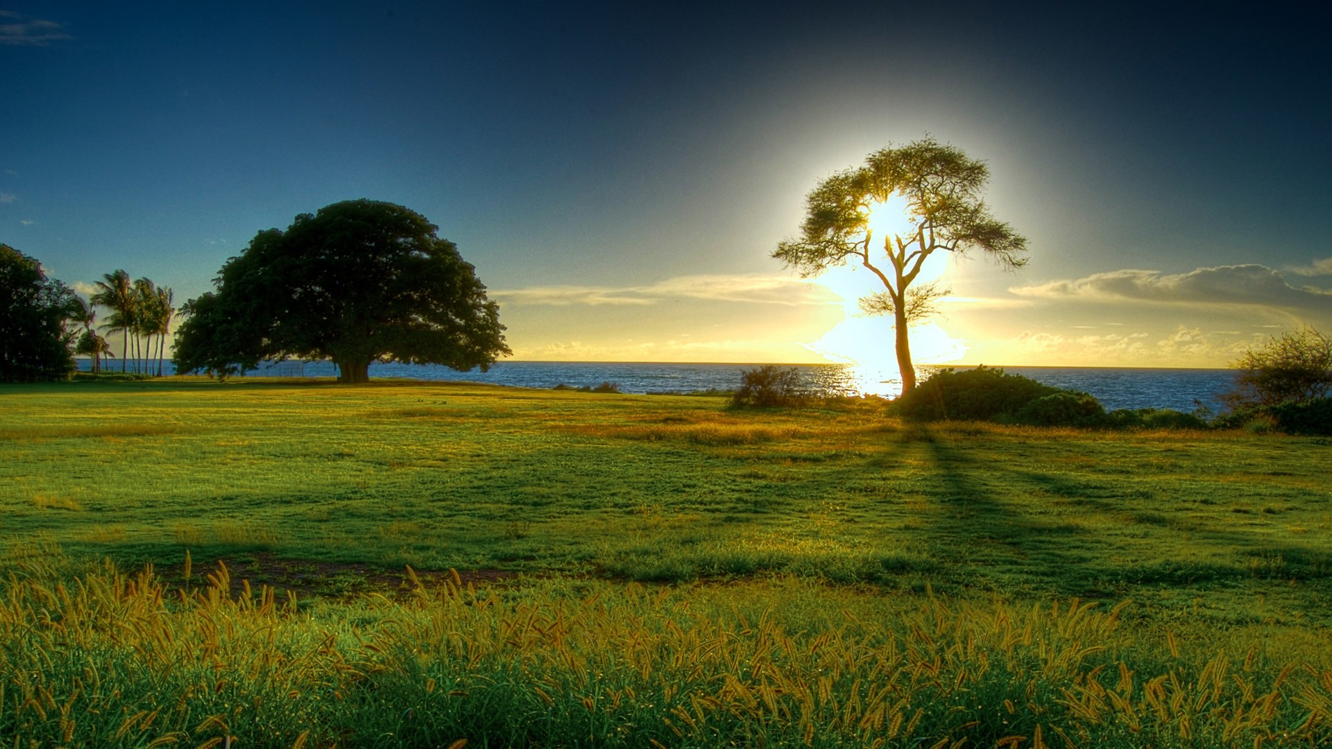 Hd Nature Wallpapers 71 Images