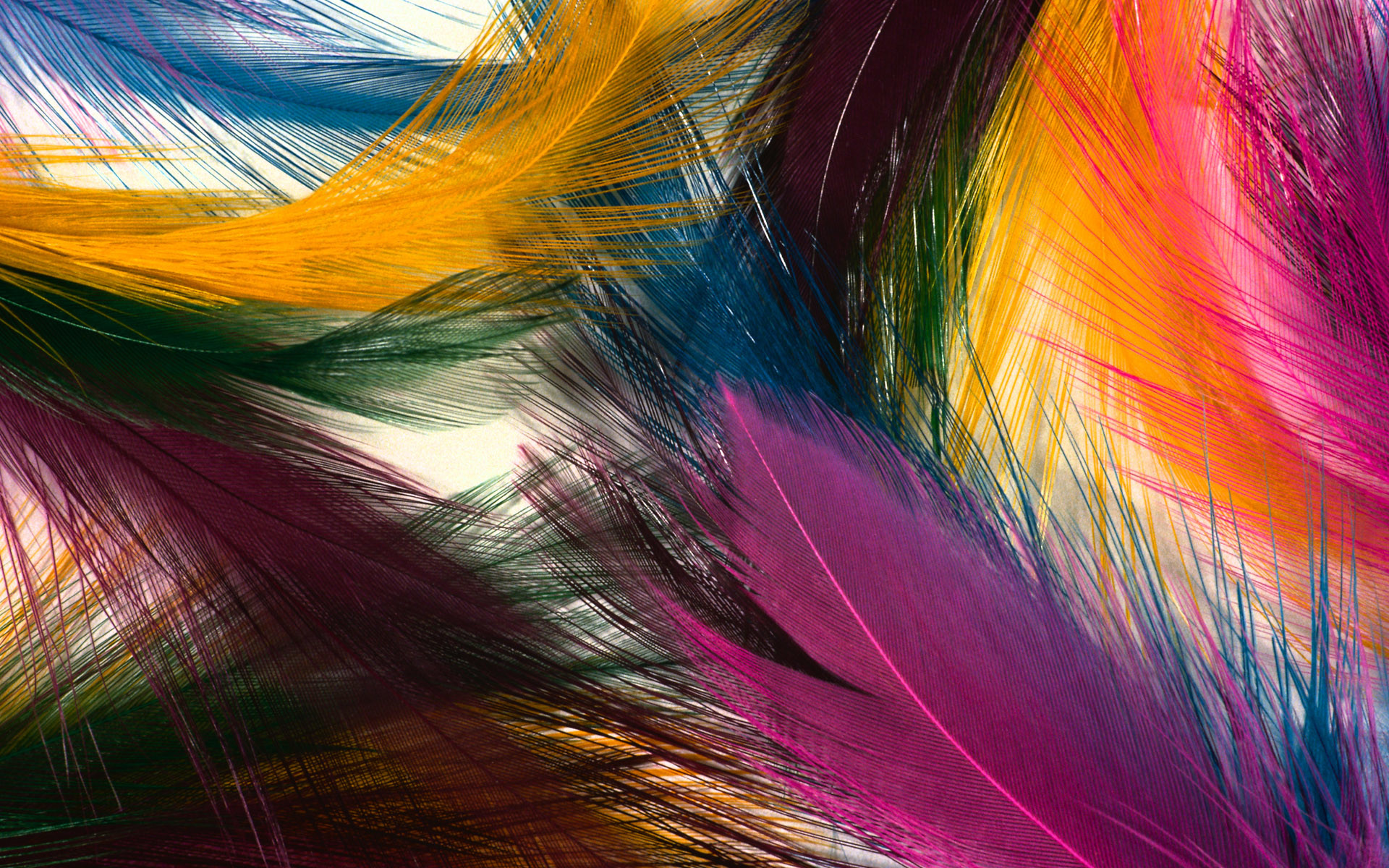 1920x1200 Colourful Feathers