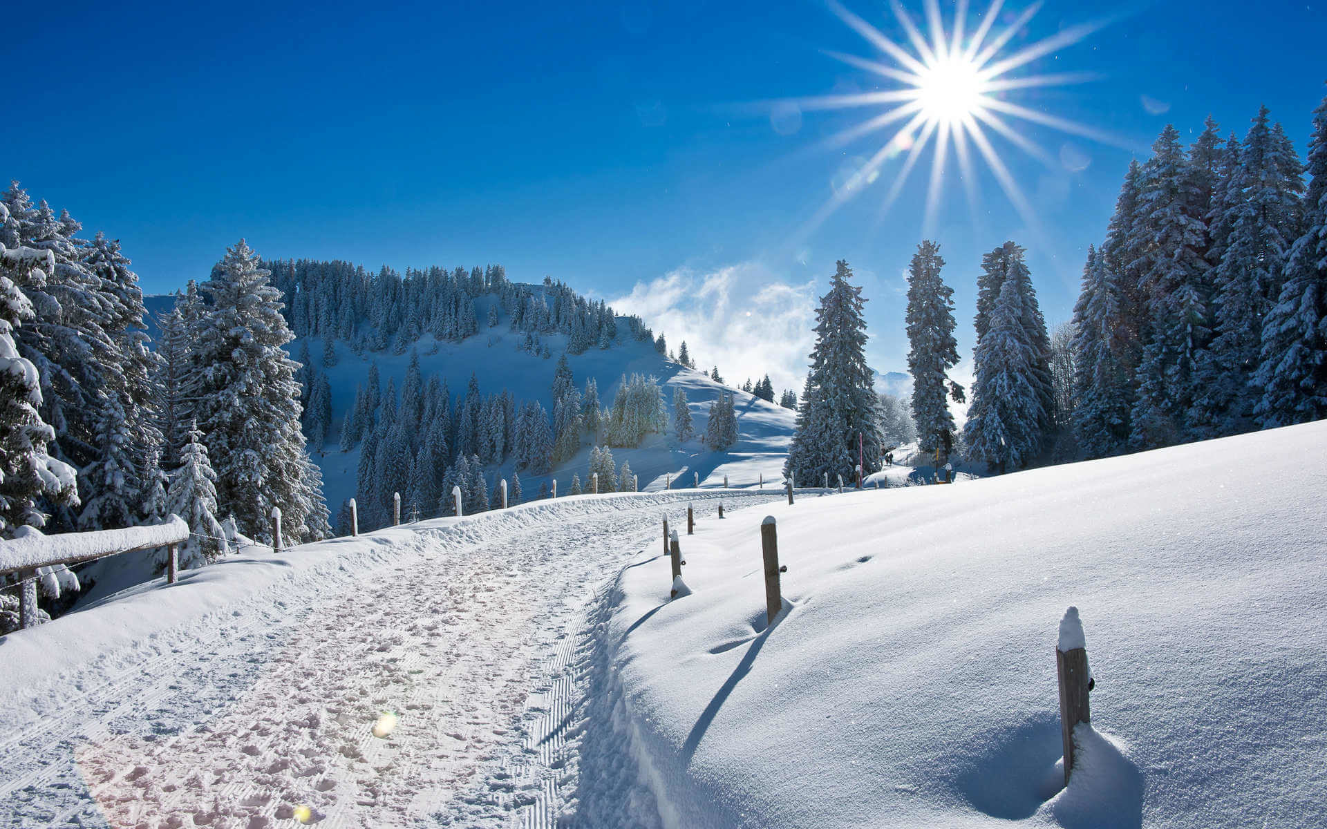 1920x1200  Winter Wonderland Wallpaper.  0.558 MB. Winter Wonderland  Photo
