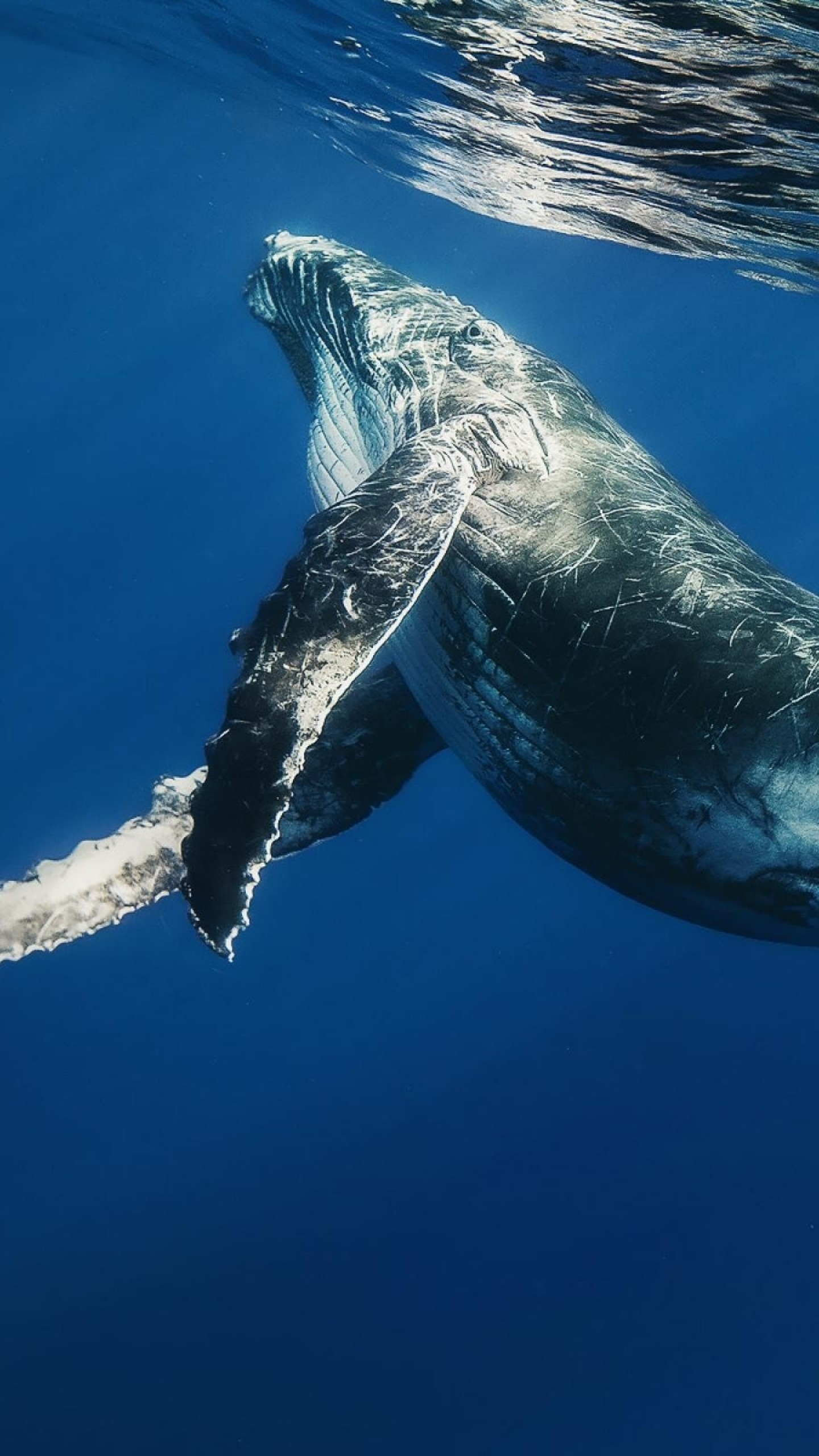1440x2560 Preview wallpaper whale, swimming, underwater, water