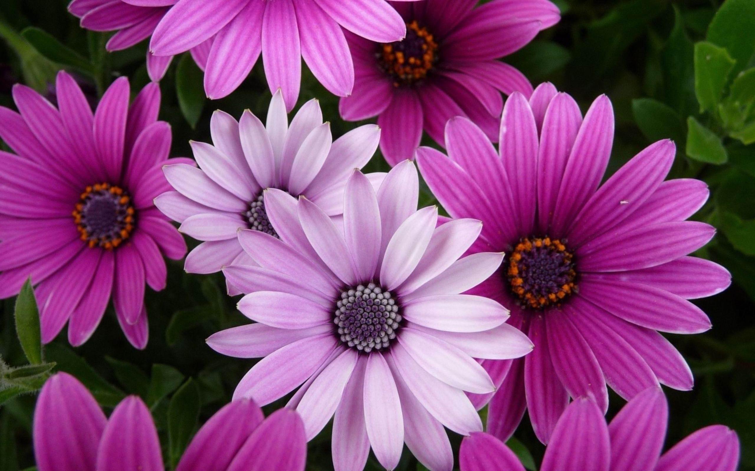 Flower Desktop Backgrounds (60+ Images