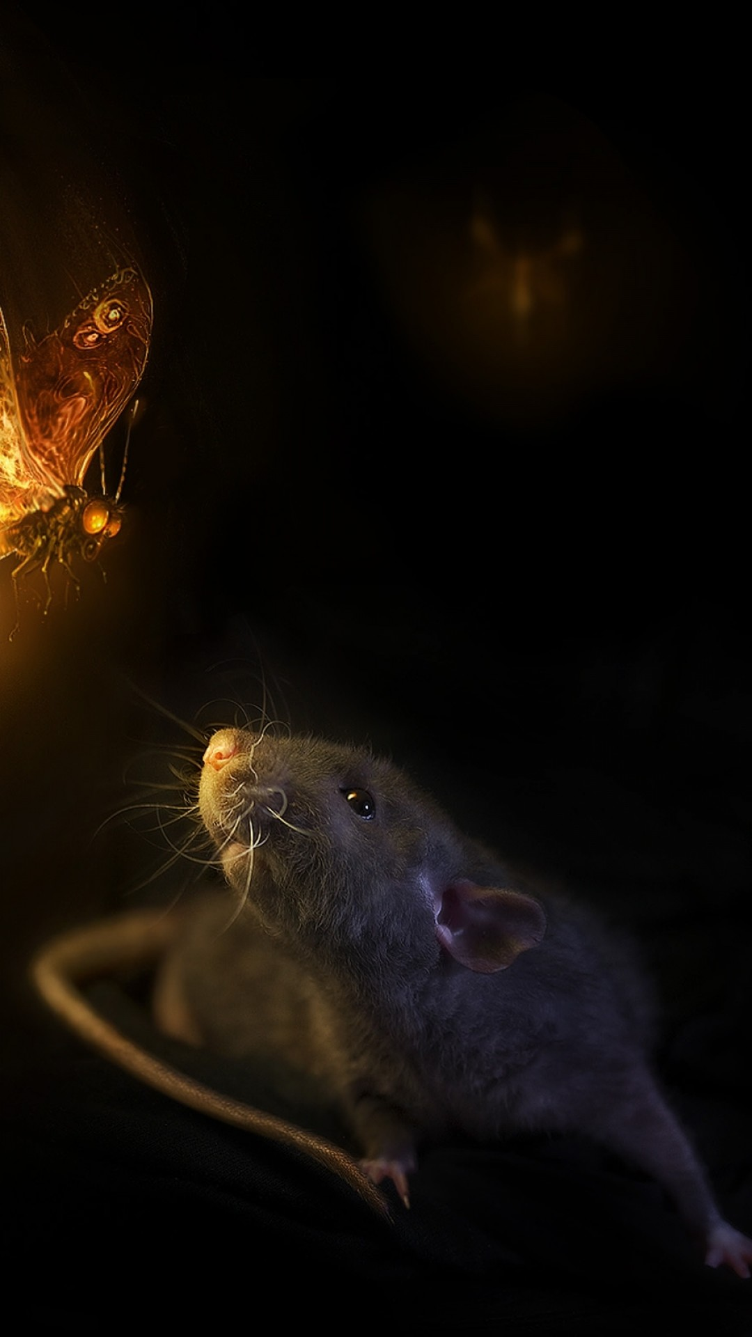 1080x1920  Wallpaper mouse, butterfly, black background, rat