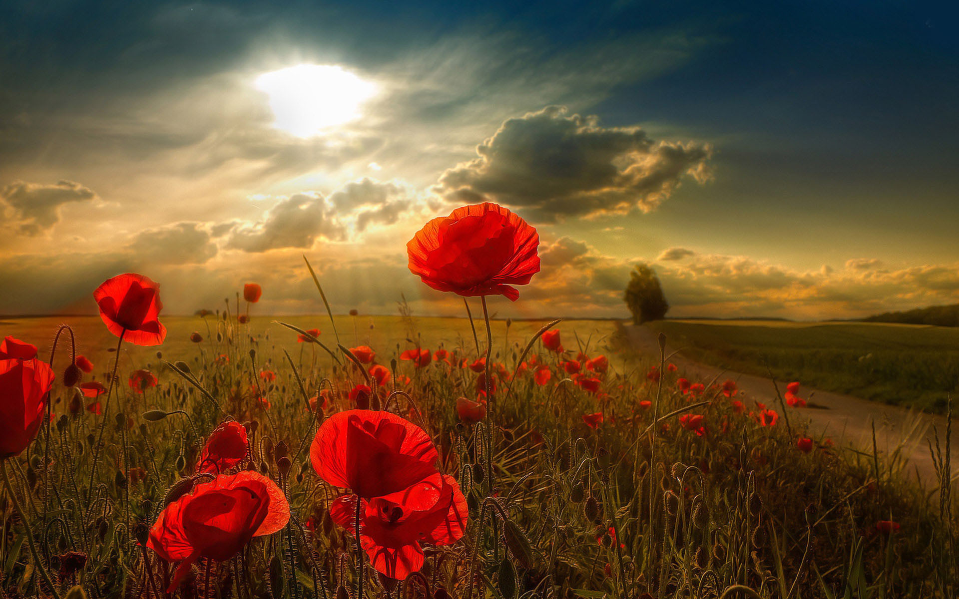 1920x1200 Red Poppy Wallpaper for Android Wallpaper
