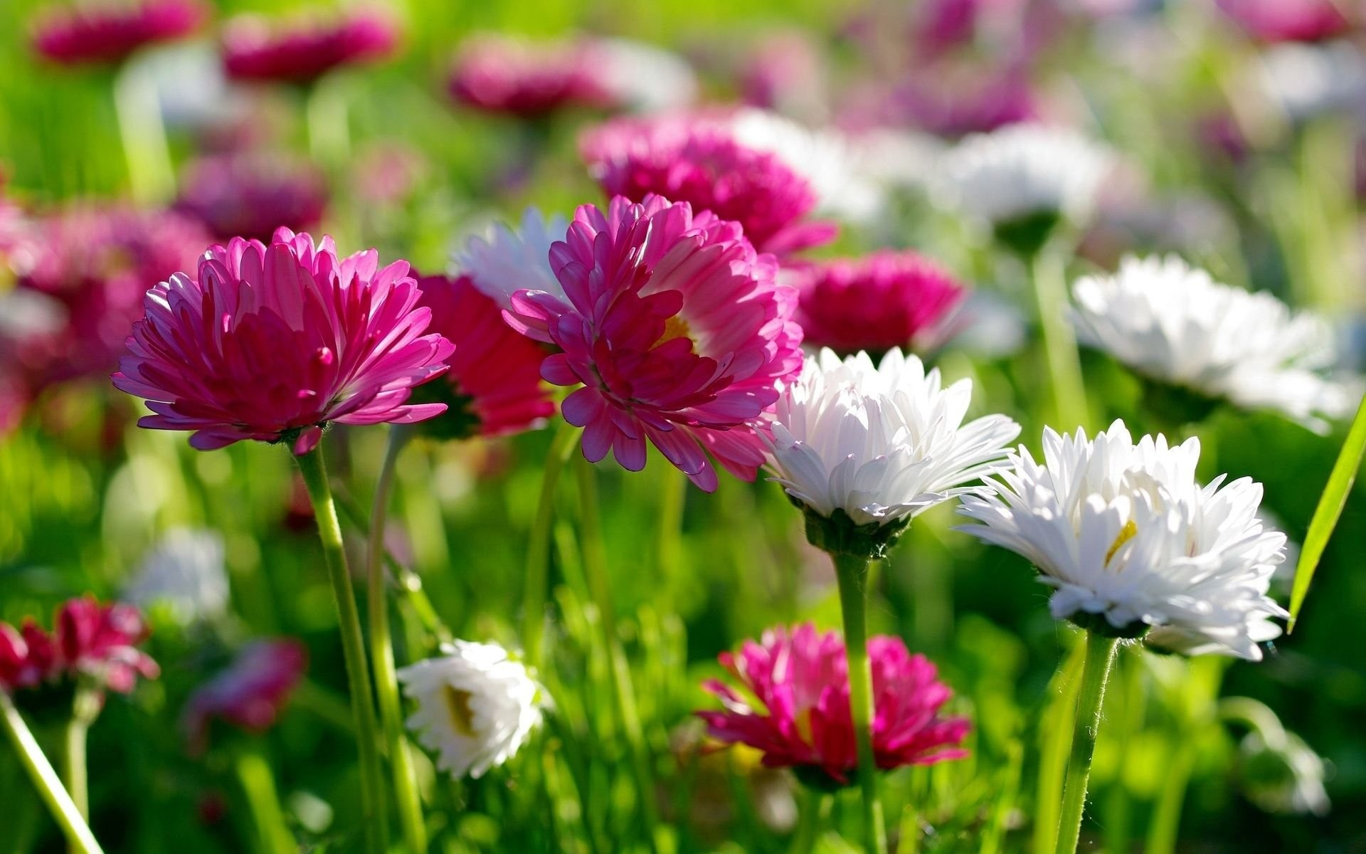 1920x1200 spring flowers | New Spring Flowers wallpaper download