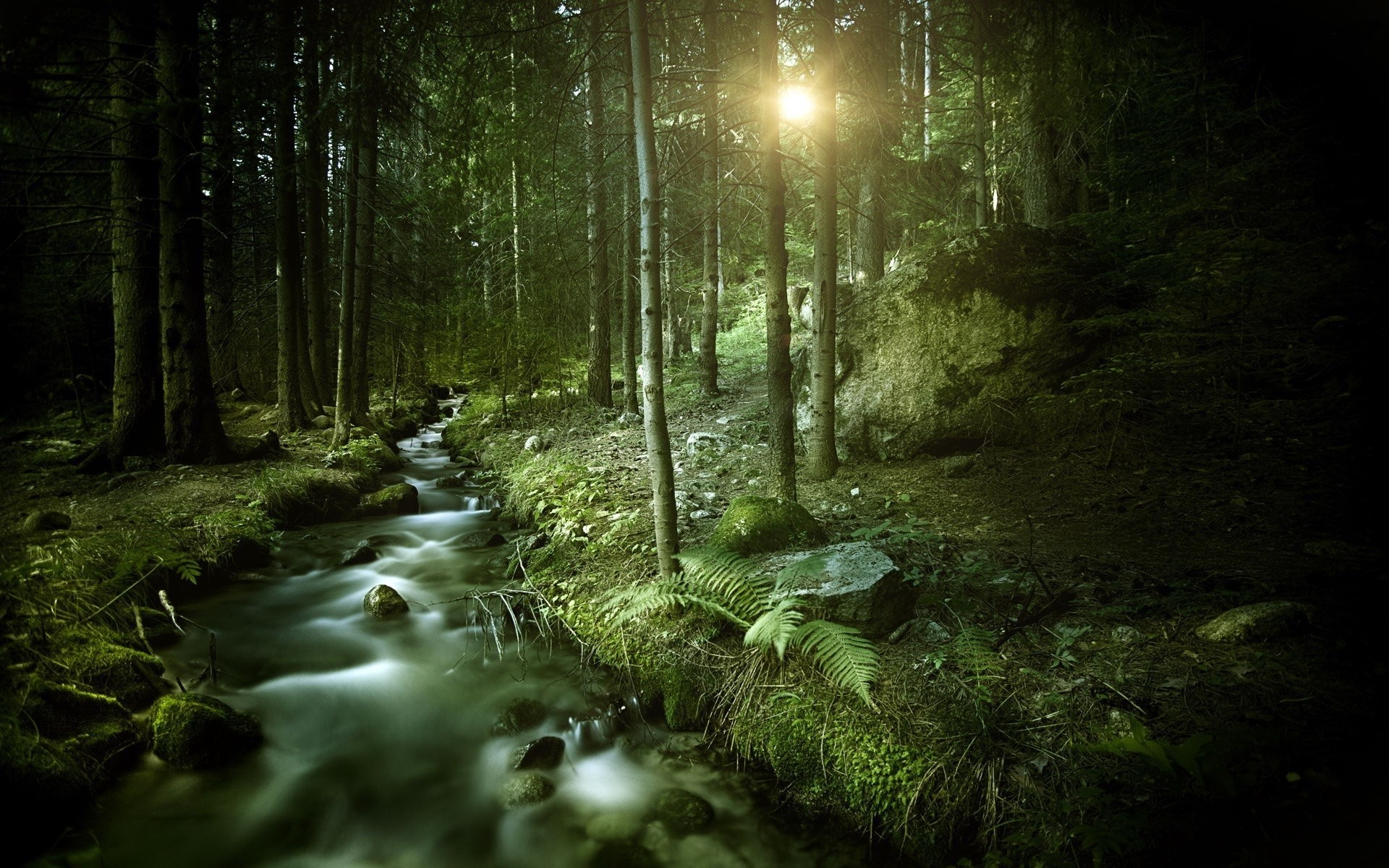 1920x1200 DArk Forest HD Wallpapers : Find best latest Dark Forest HD Wallpapers for  your PC desktop