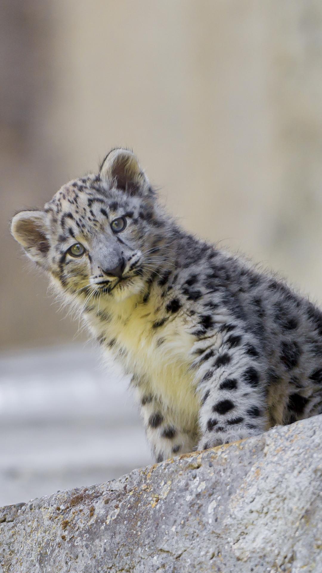 2560x1600 Baby Snow Leopard