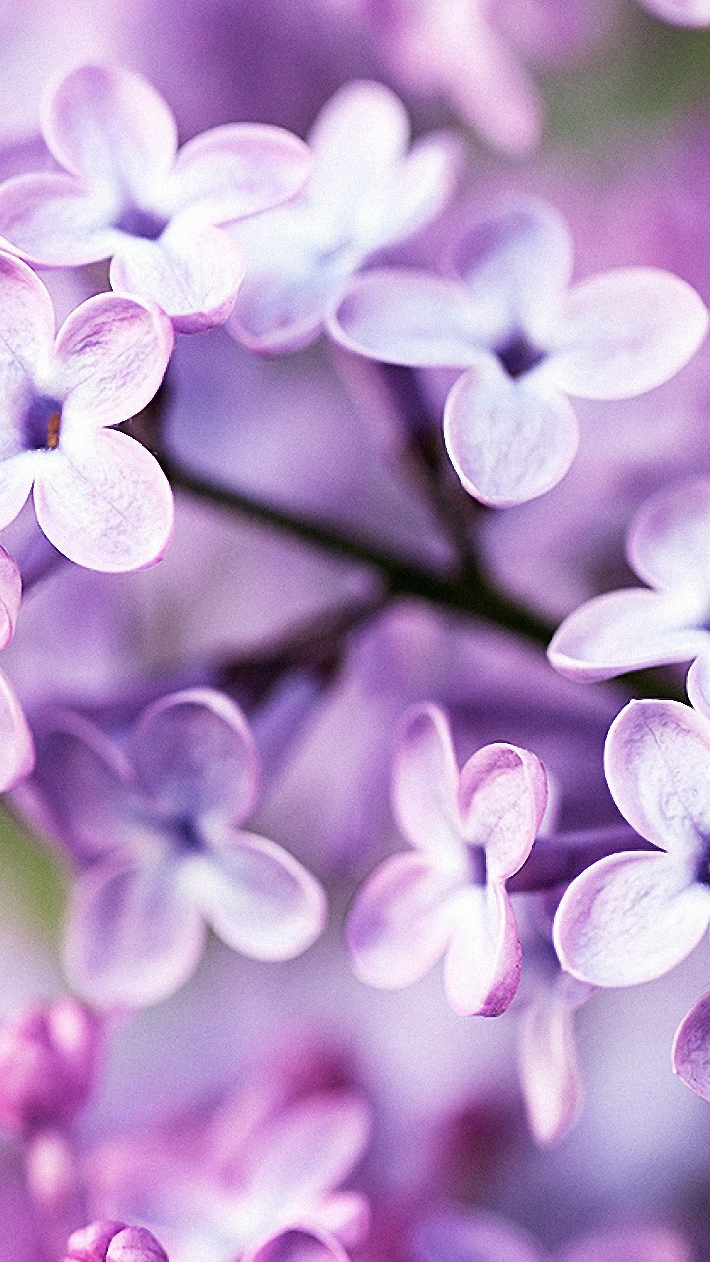 1440x2560 Cute Spring Flowers IPhone 6s Wallpapers HD