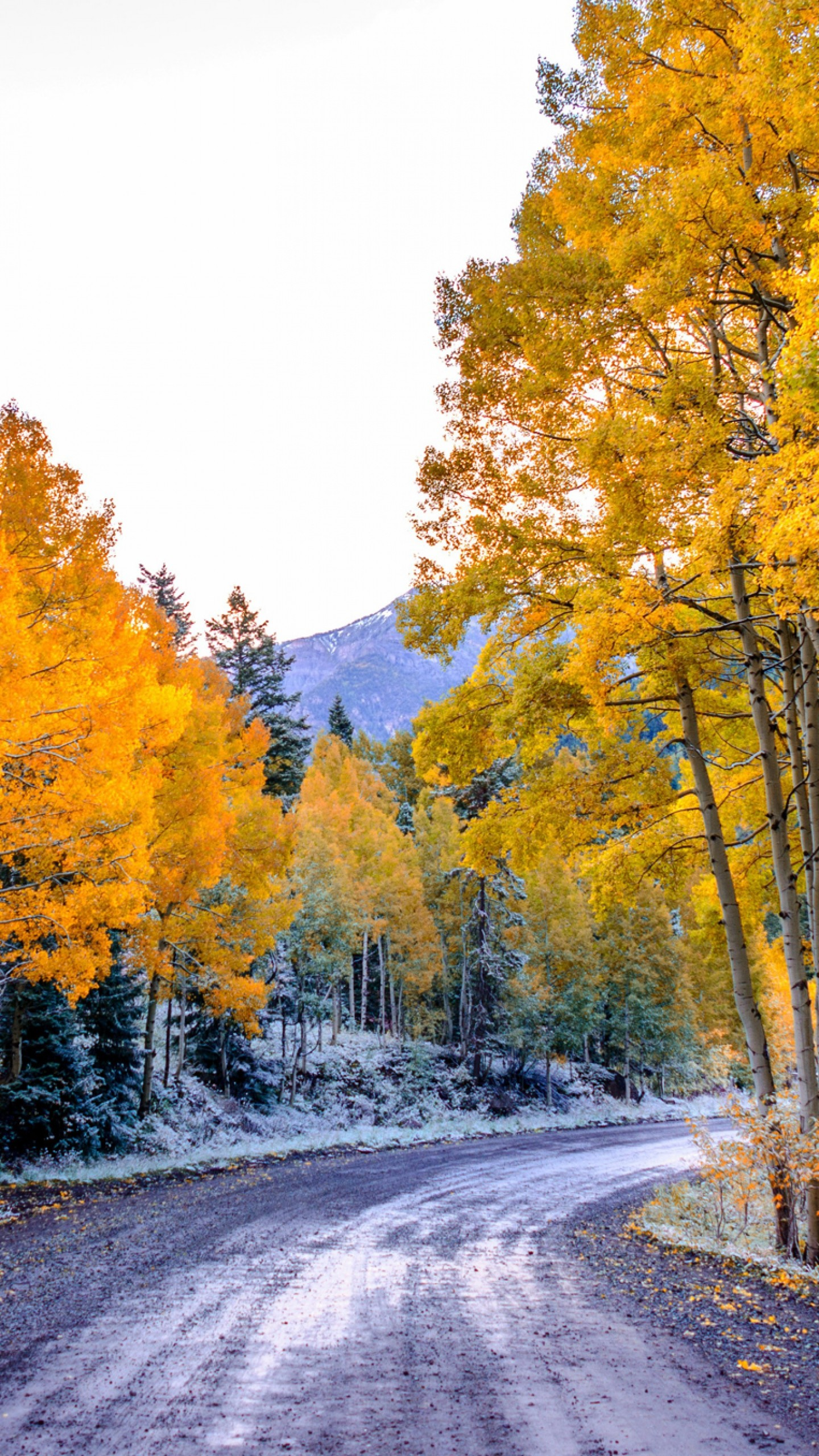 1440x2560  Wallpaper aspen, colorado, usa, trees, fall, twist