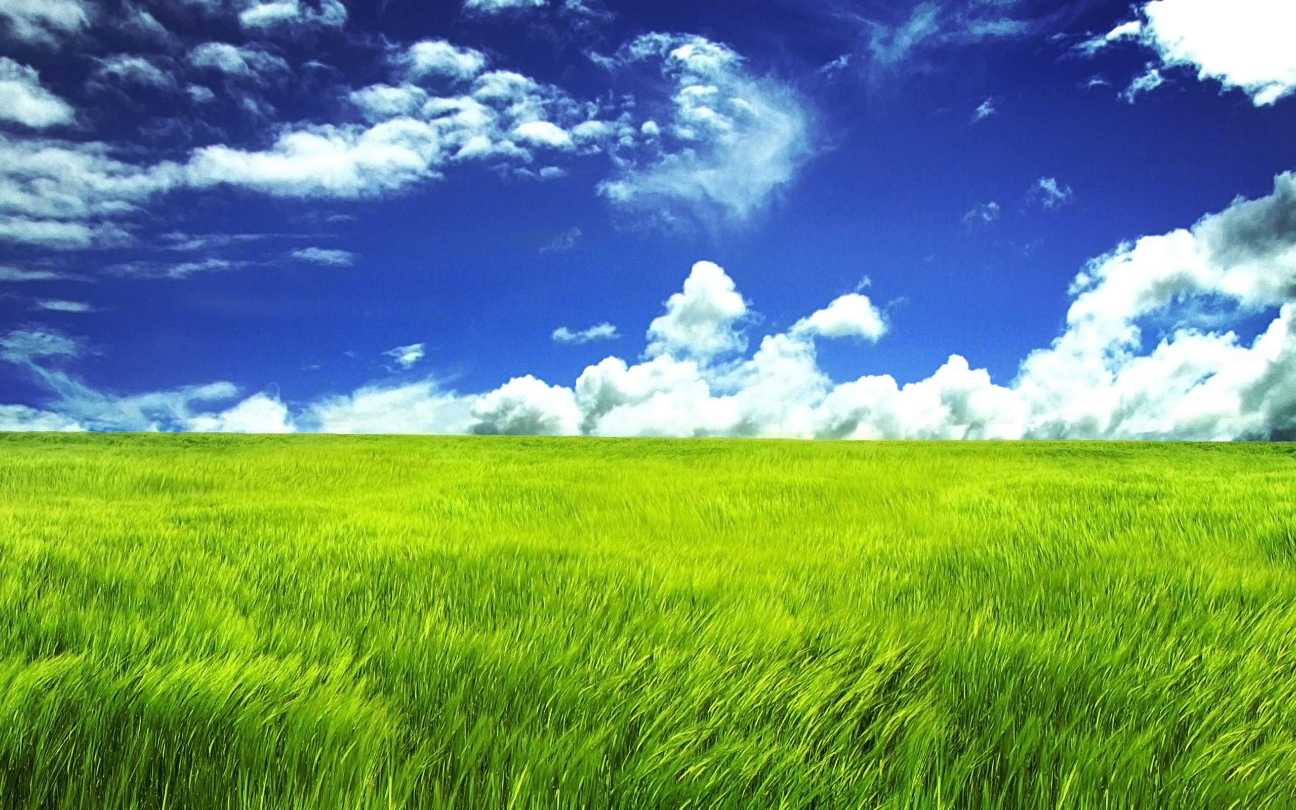 Pretty Green Backgrounds 39 Images