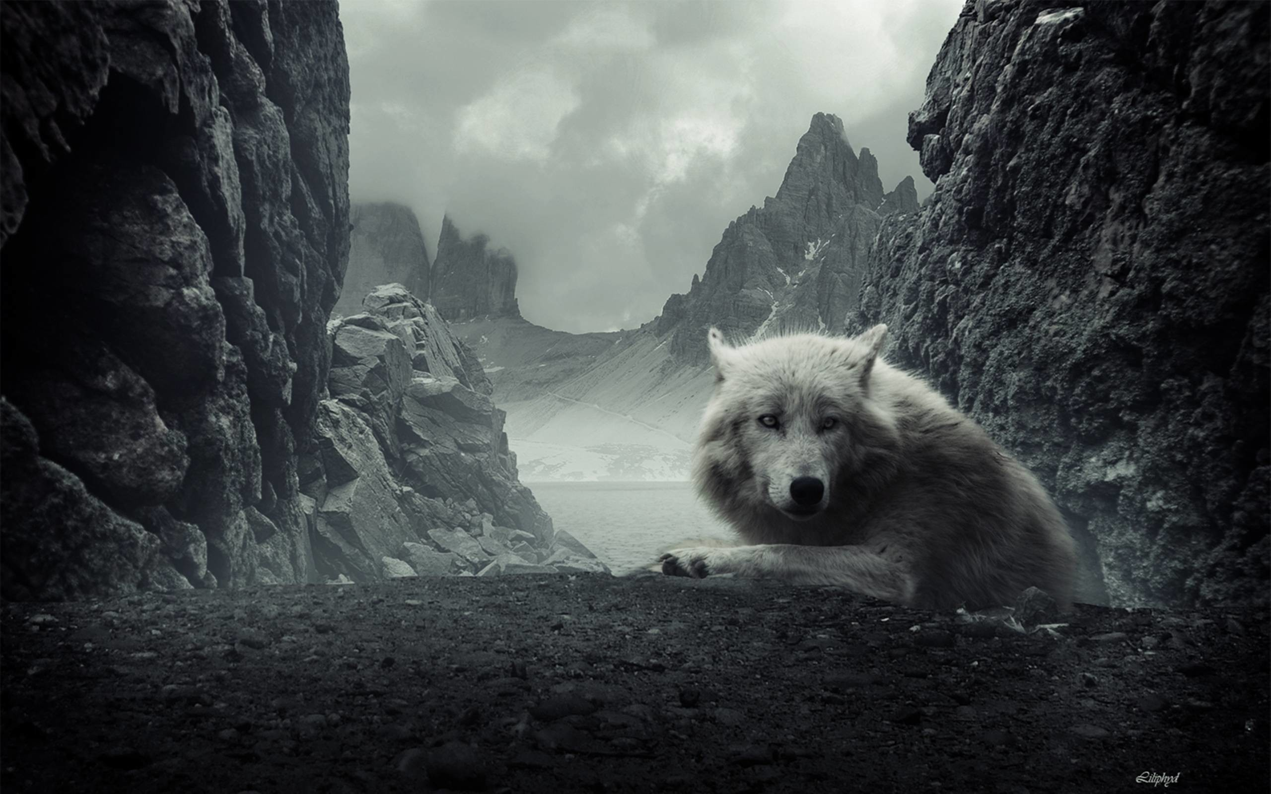 2560x1600 745 Wolf Wallpapers | Wolf Backgrounds